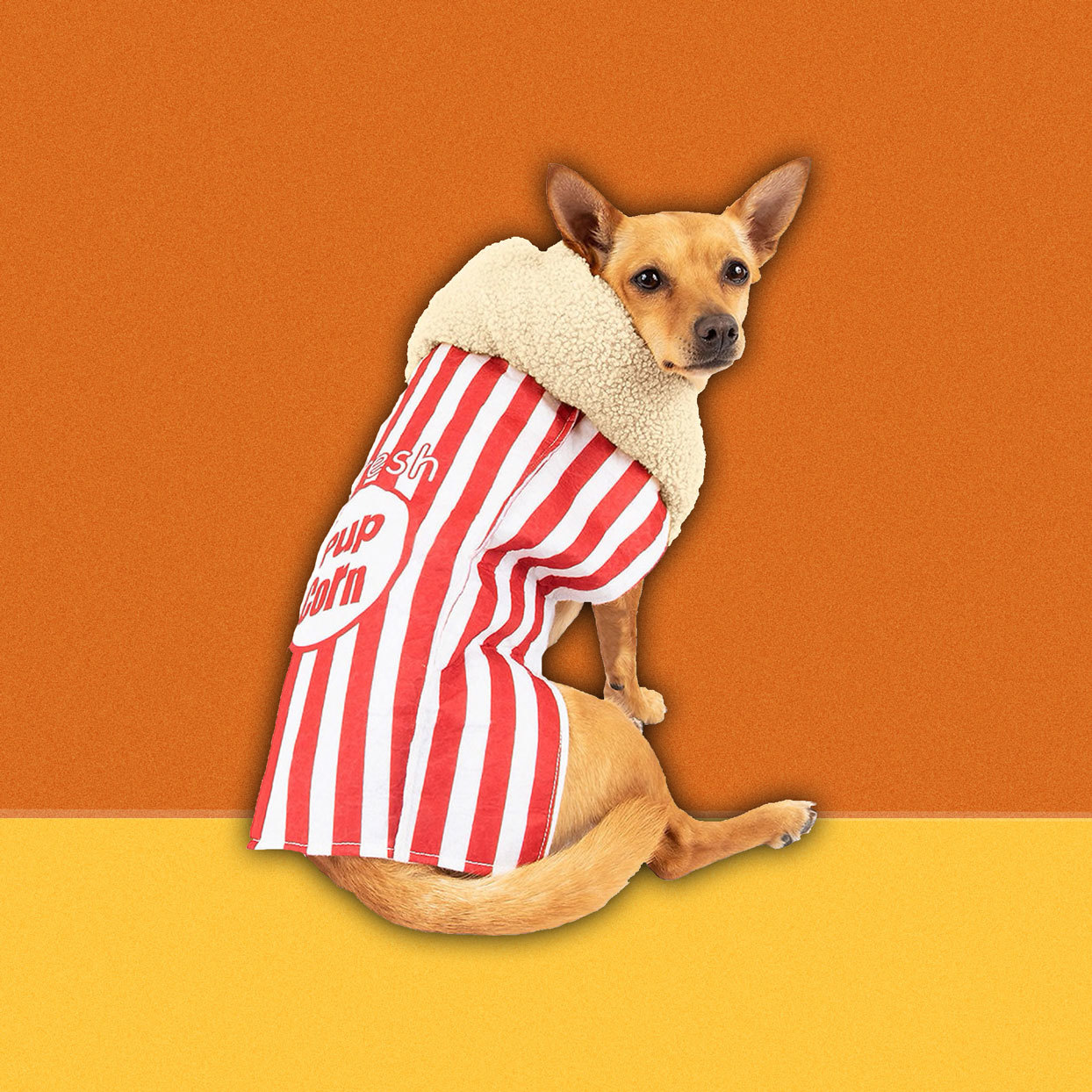 dog in popcorn box costume