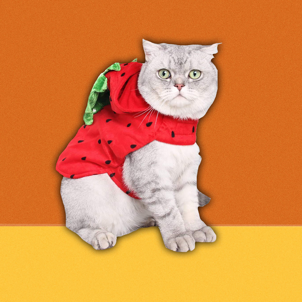 Your cat will be extra-cute as this delicious summer berry with a stem hood. This costume will help keep your feline cozy if you're experiencing colder weather.$12.99