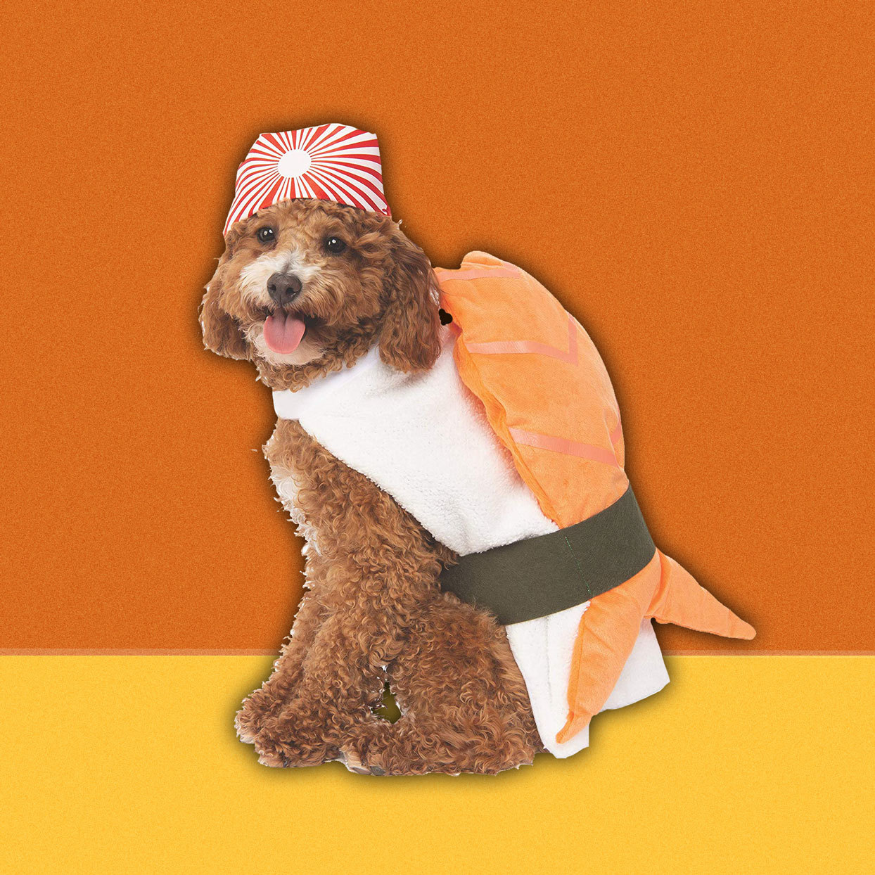 dog wearing sushi costume