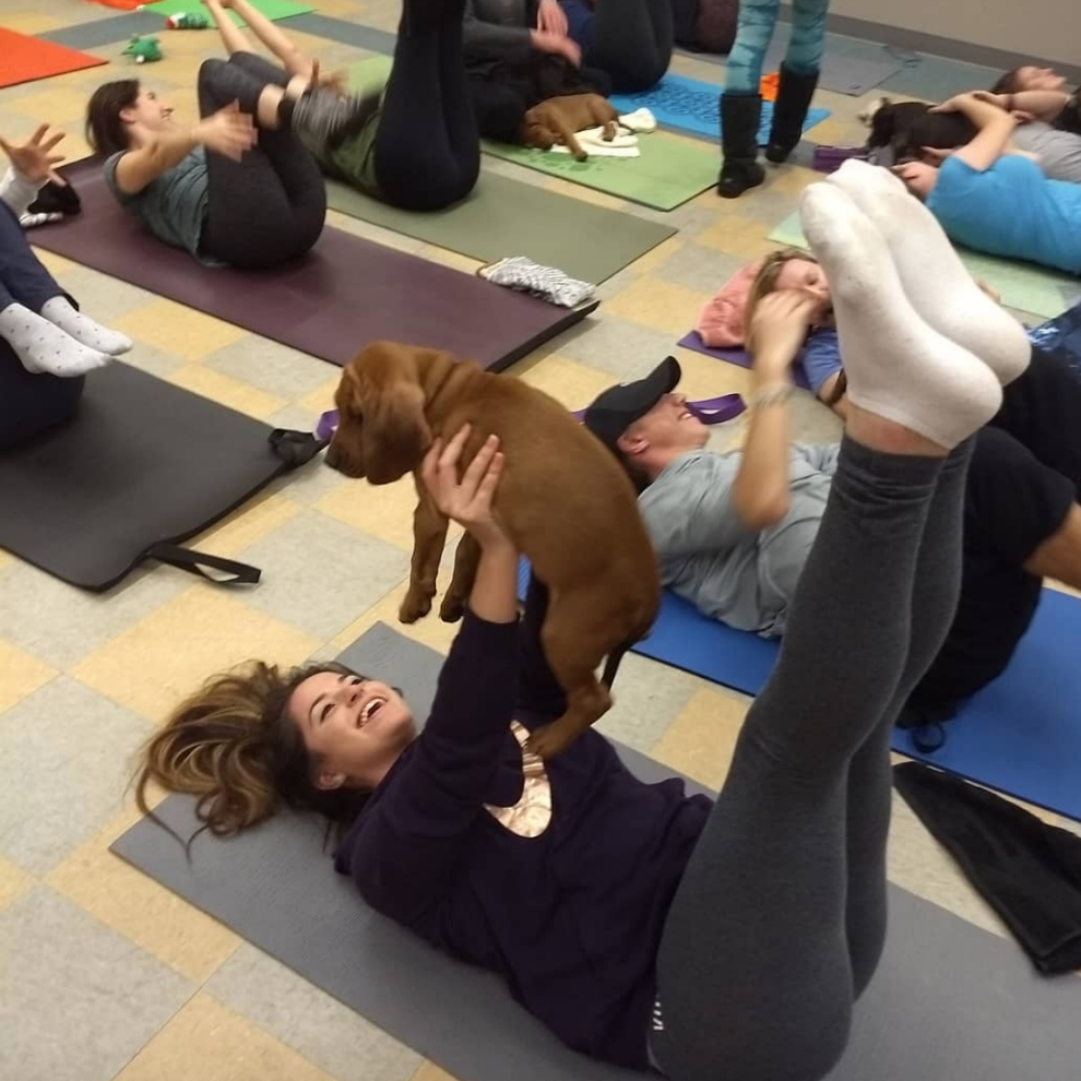 people doing pilates while holding puppies