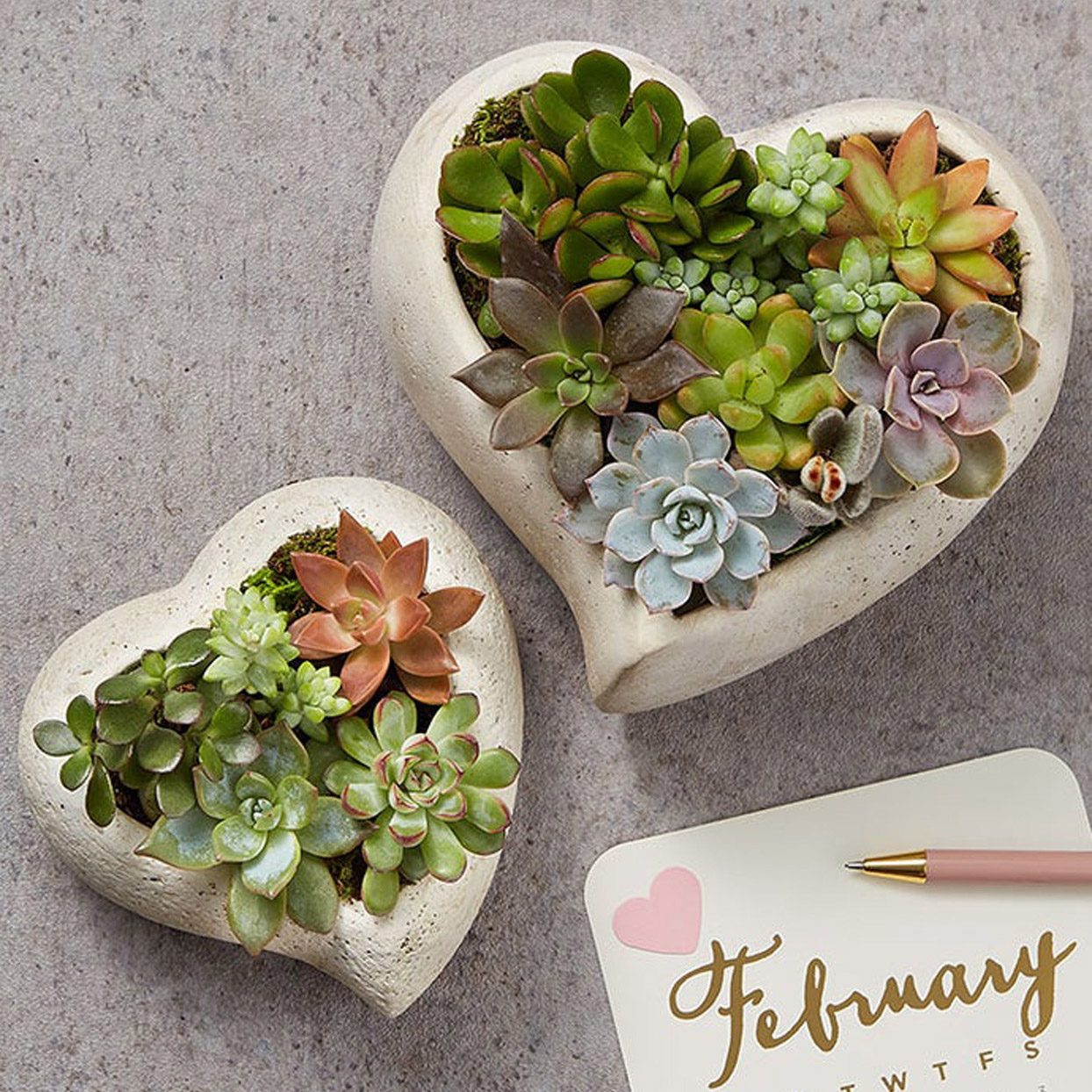 heart-shaped succulent garden