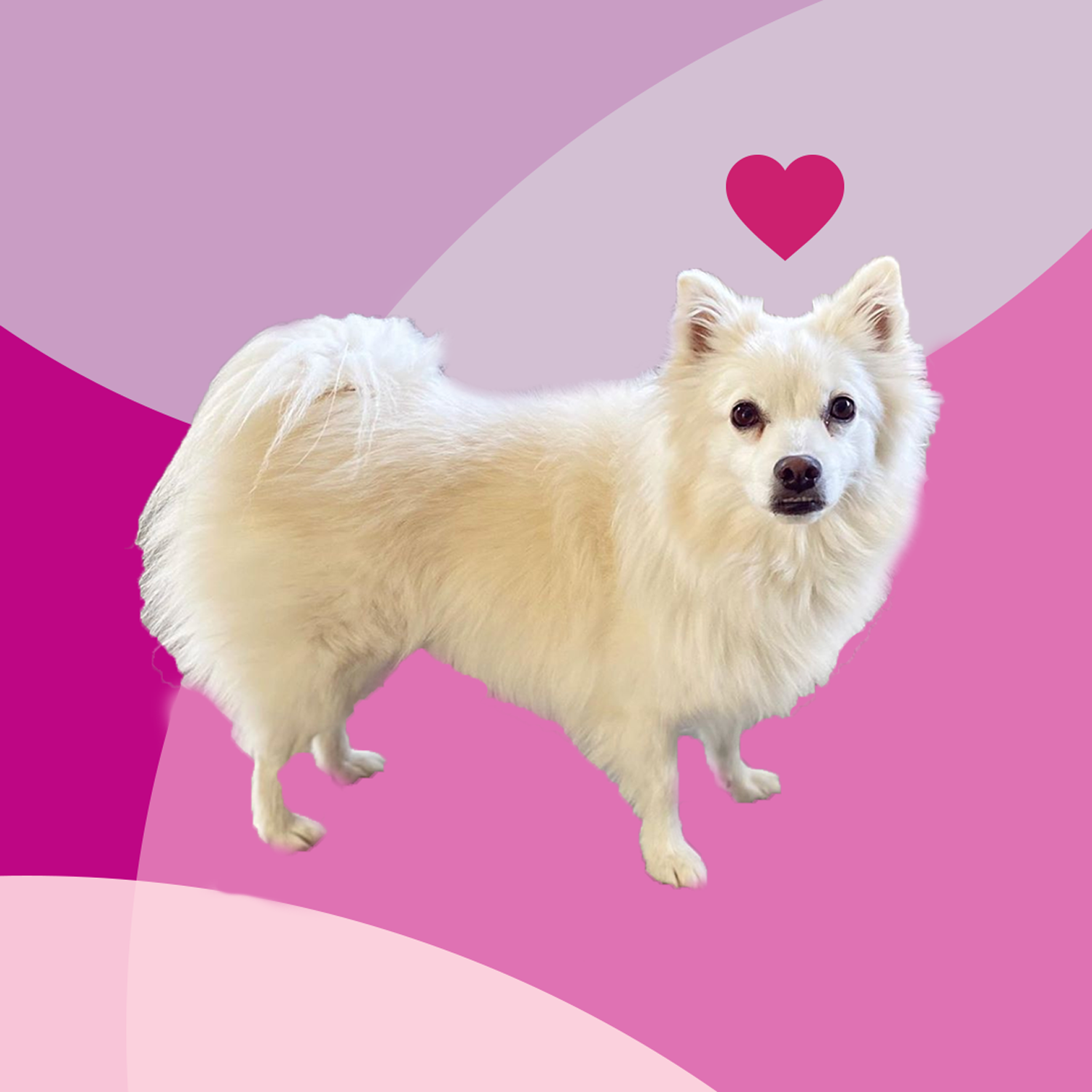 7 Subtle Ways Your Dog Could Be Saying 'I Love You,' According to a Vet
