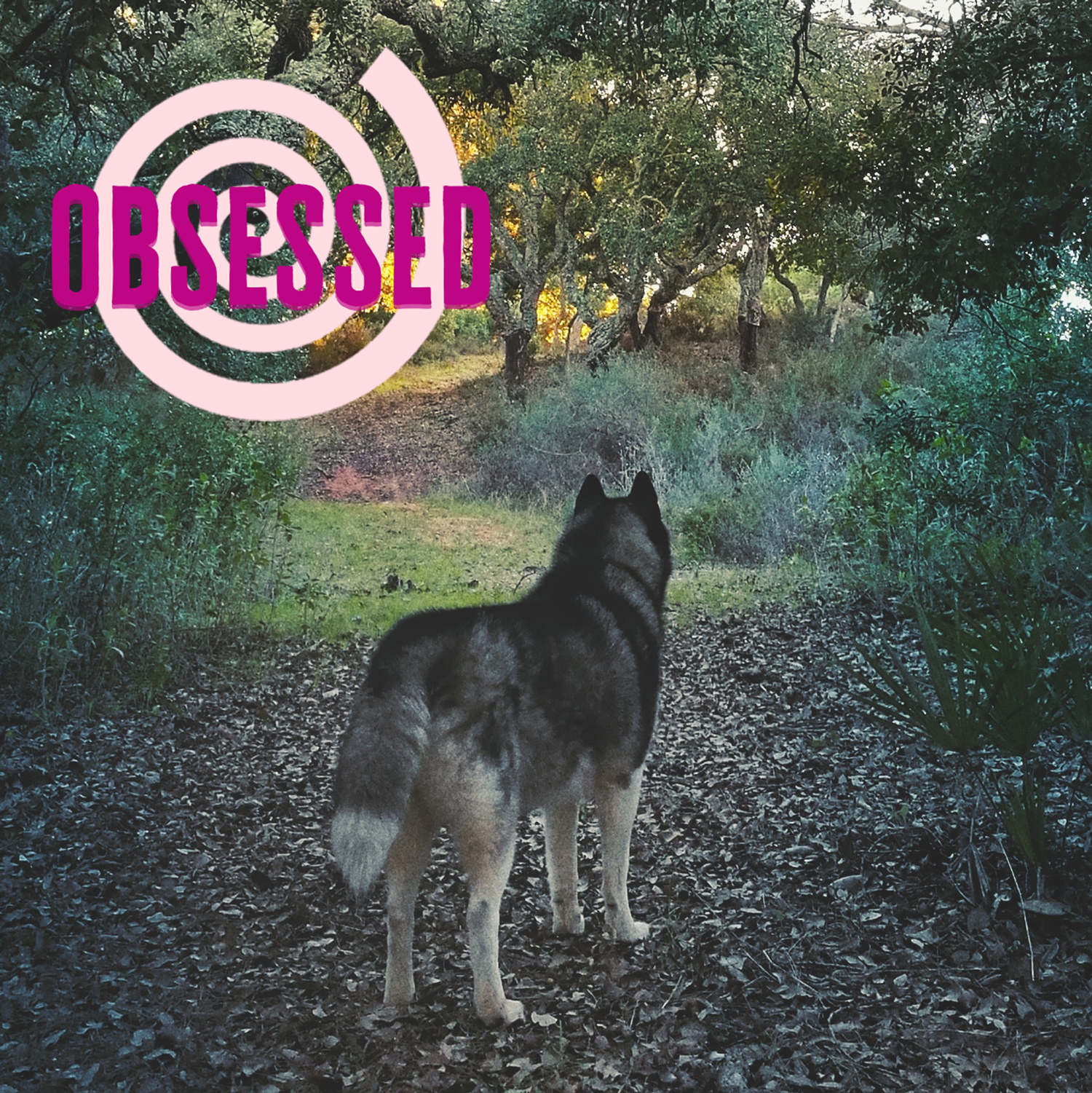 Wolf Hike Airbnb