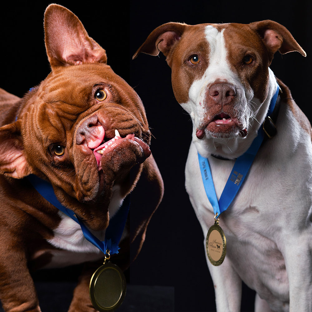 Forget Westminster! Here Is the First Group of Winners from the 2020 American Rescue Dog Show