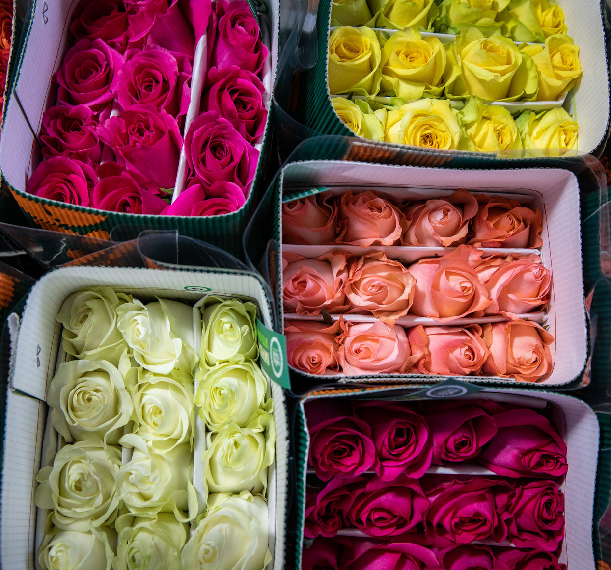 roses from whole foods