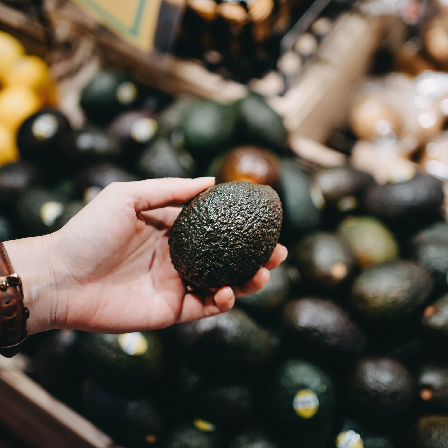 Hand holding an avocado