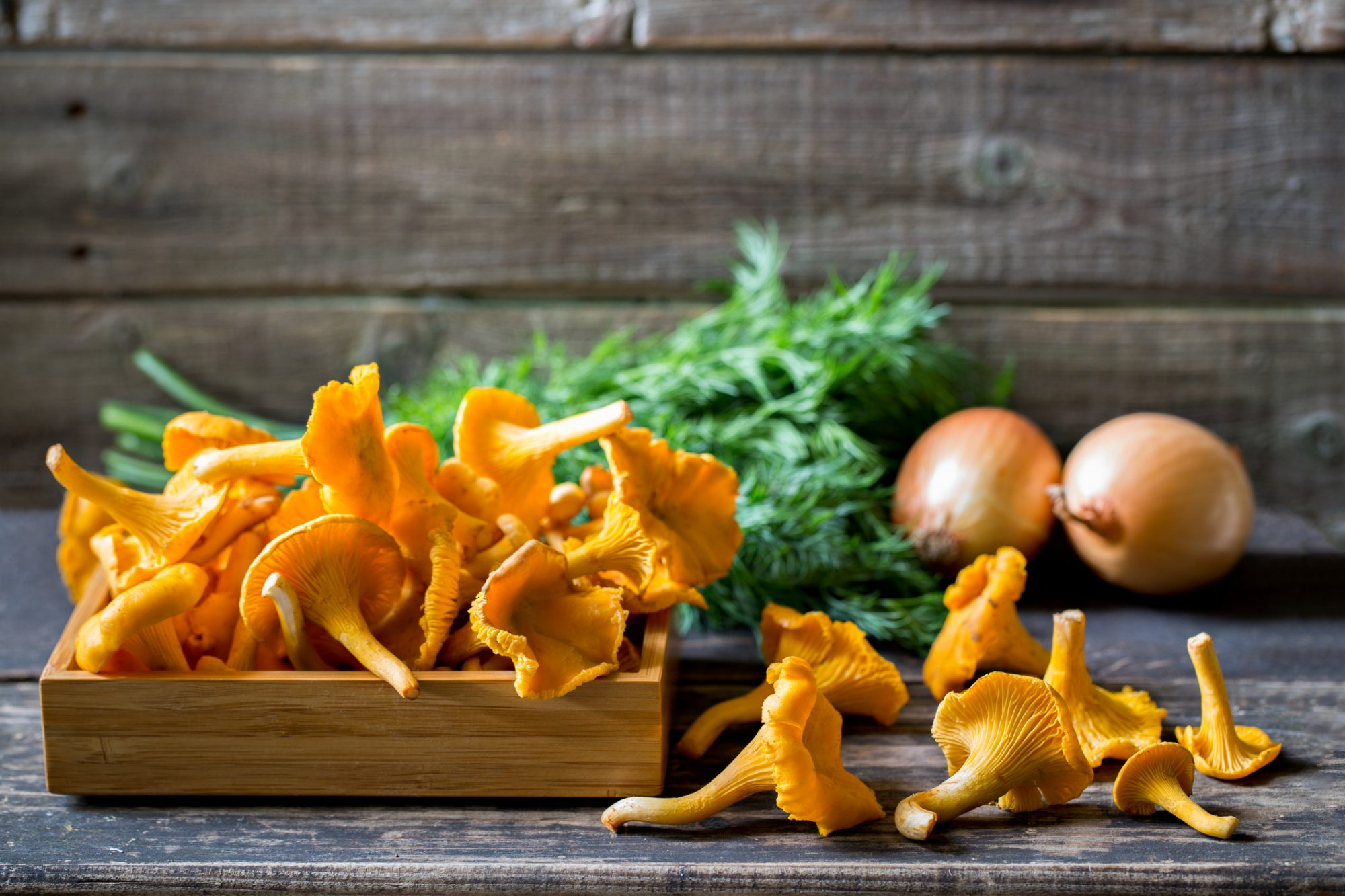 Fresh chanterelle mushrooms on rustic table with onions and dill