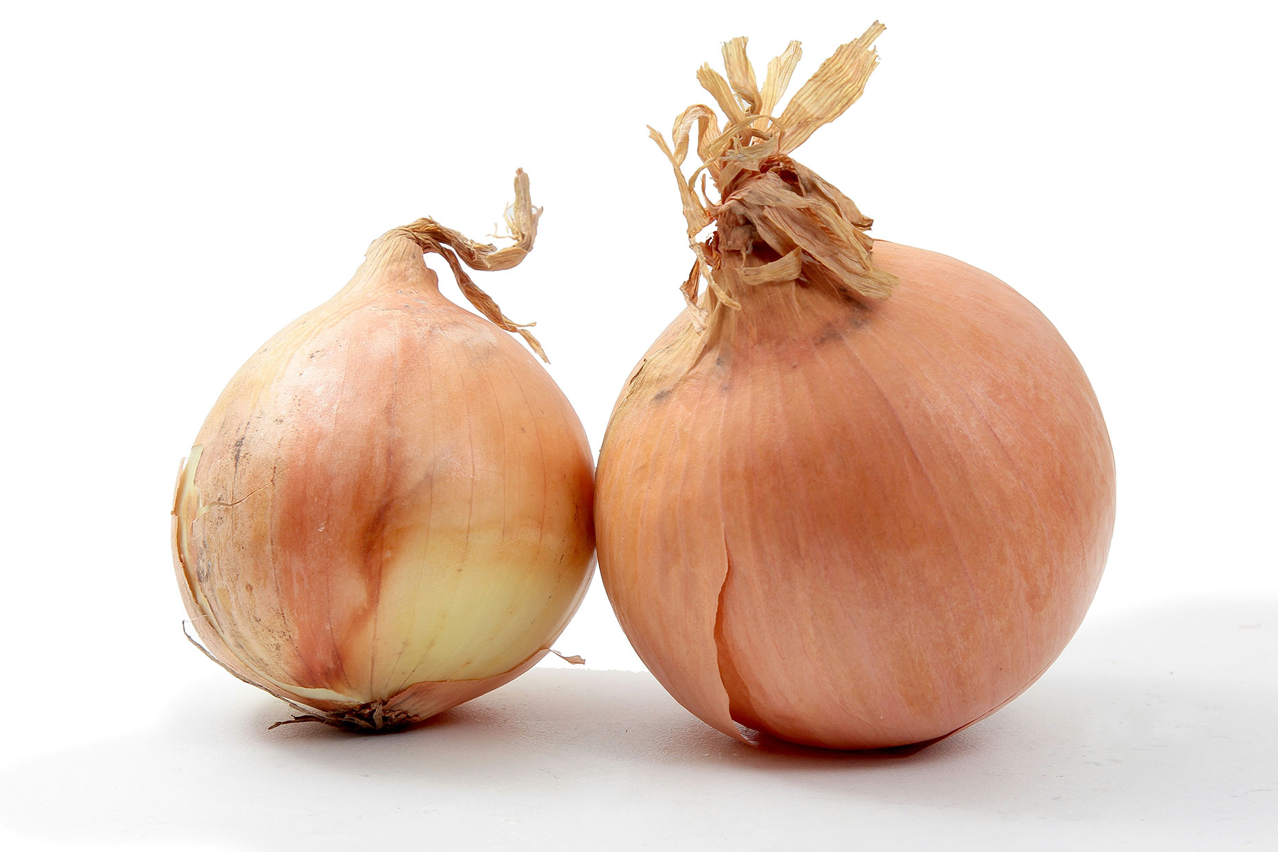 two onions against a white background