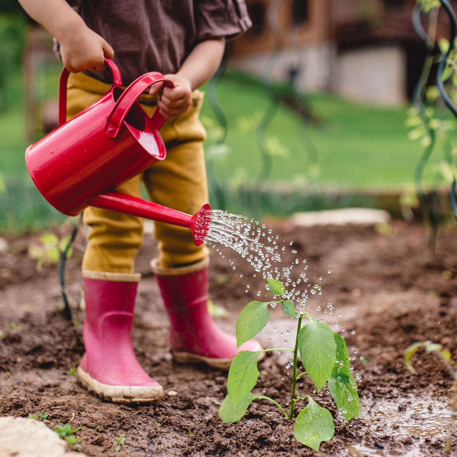 Photo of kids legs in red rain boots, holding a red watering can, watering a garden.