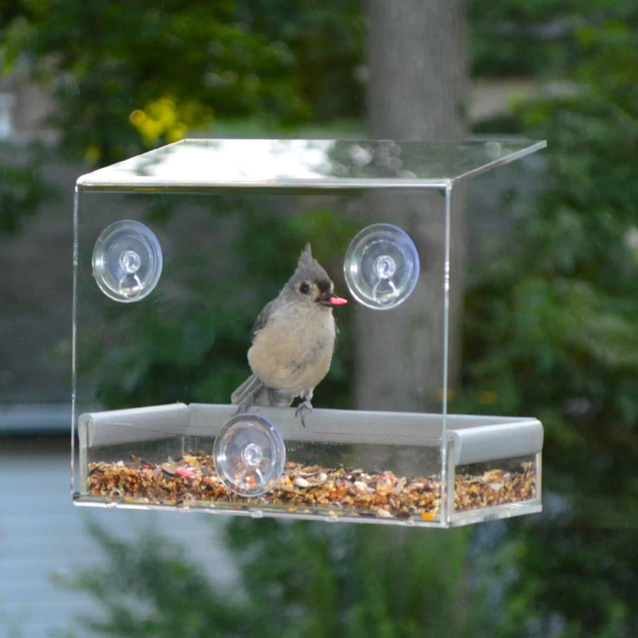 wayfair window bird feeder