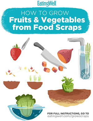 Preview of the PDF about growing food from food scraps