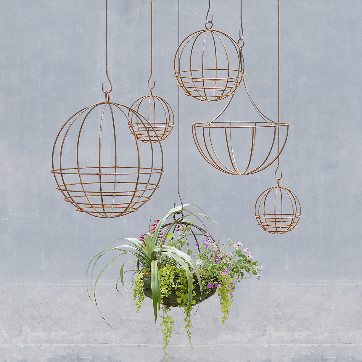 Terrain hanging plants