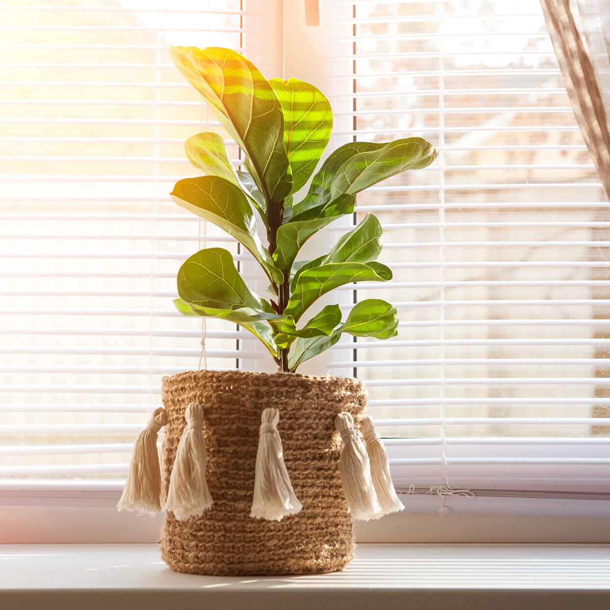 This Is the One Tool You're Missing to Take Care of Your Plants