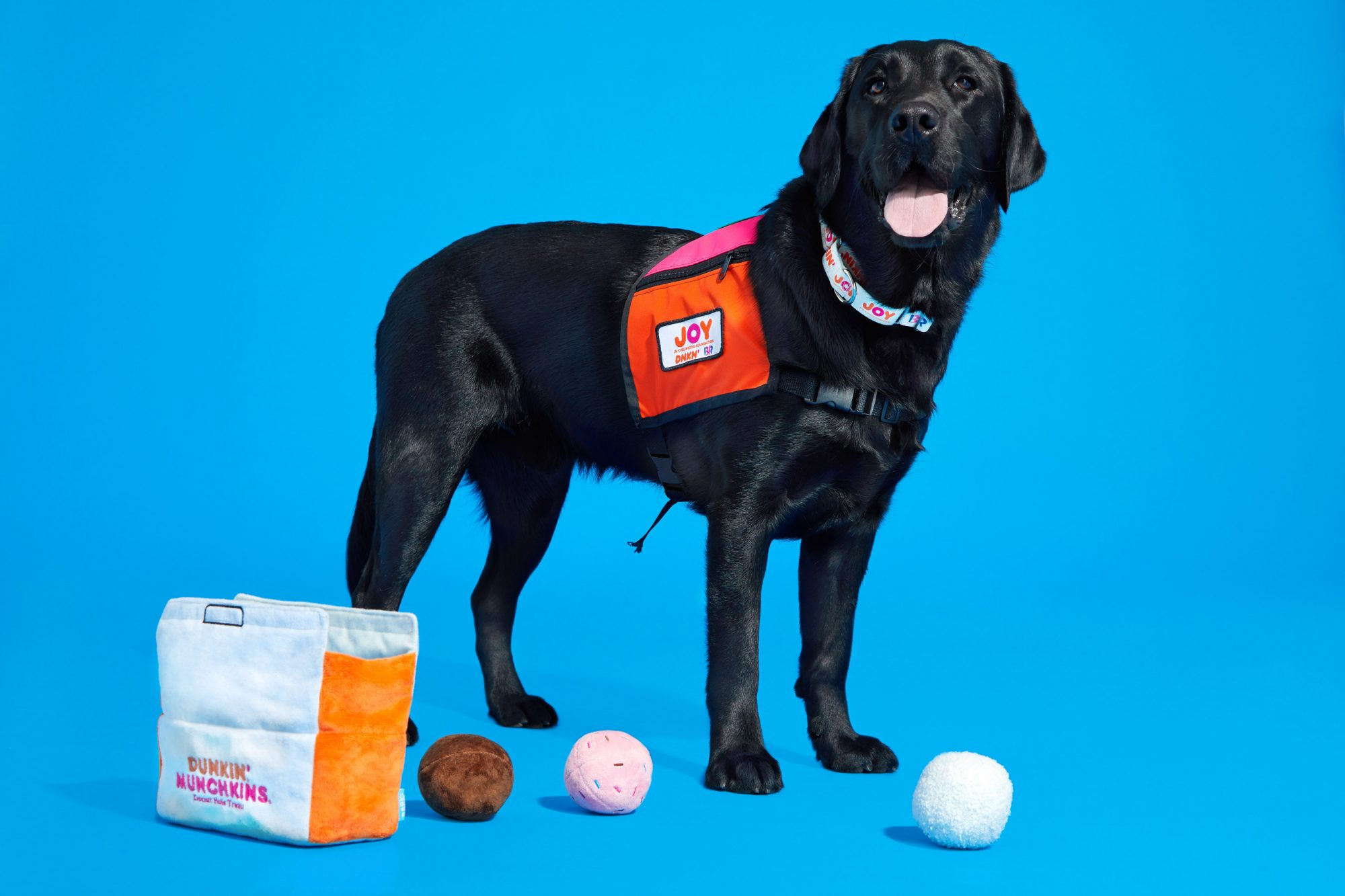 Black lab with Dunkin' dog toys and little backpack thing
