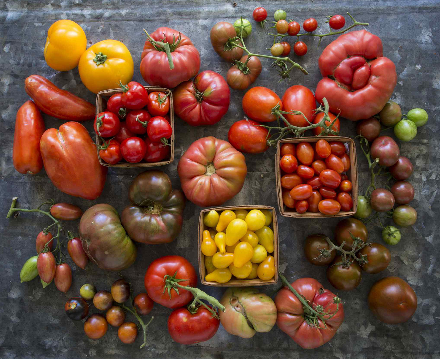 Various types of tomatoes laid out on a table