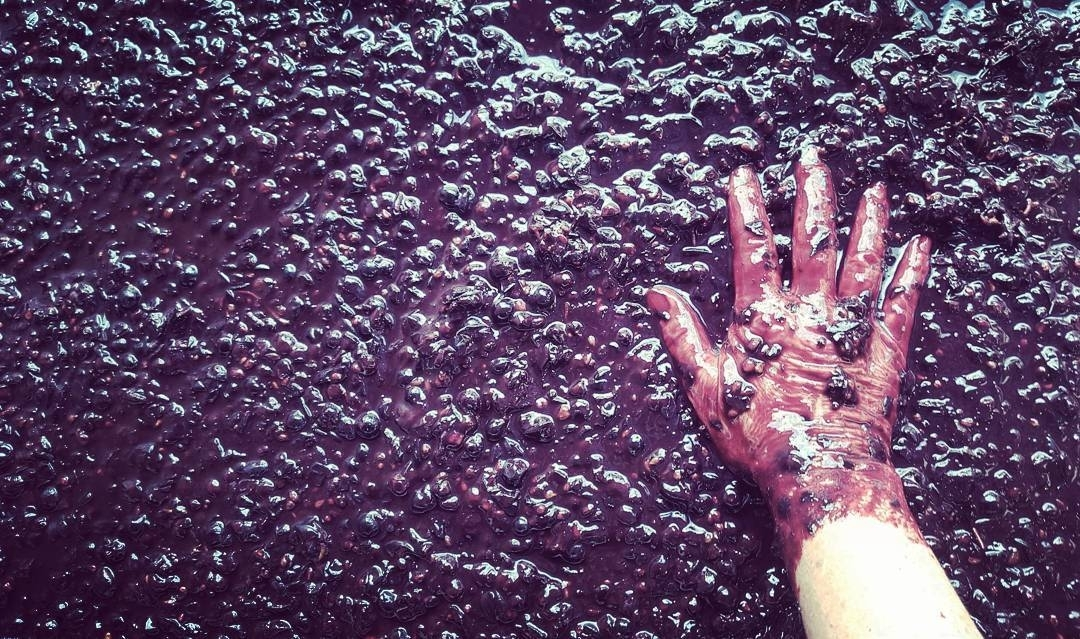 grape juice on skins with a hand