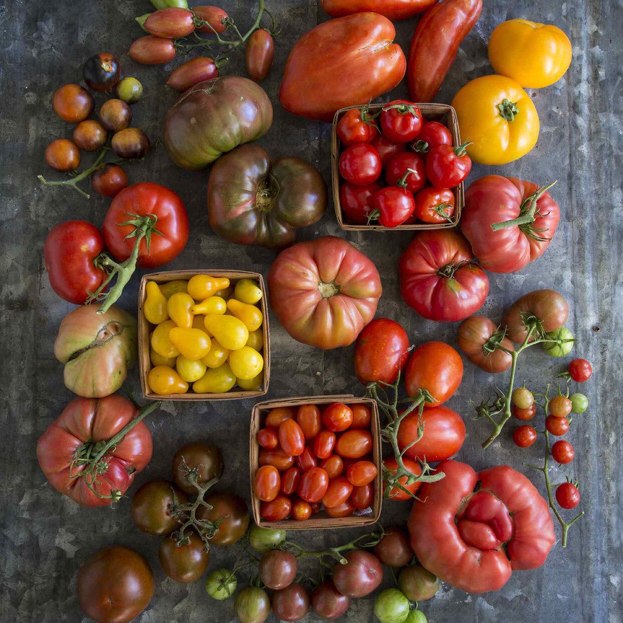 Various fresh tomatoes