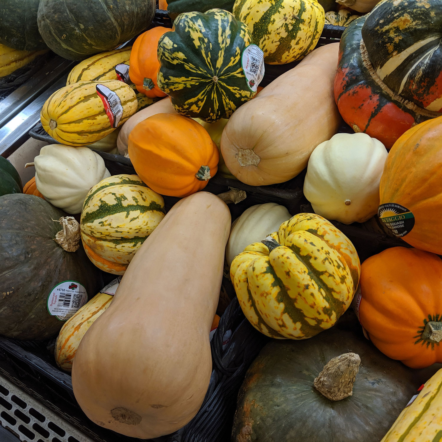 squash at grocery store