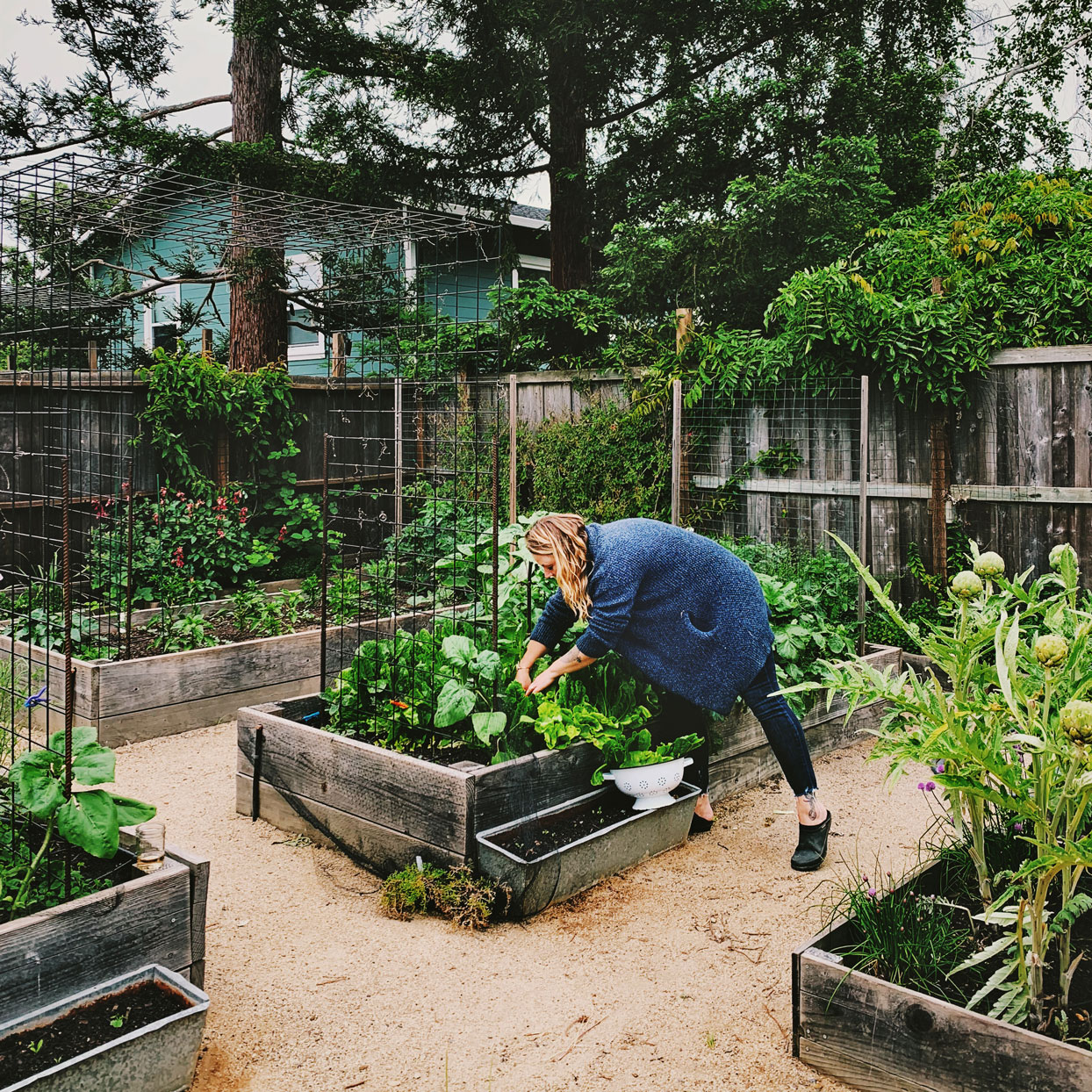 woman tending to raised bed