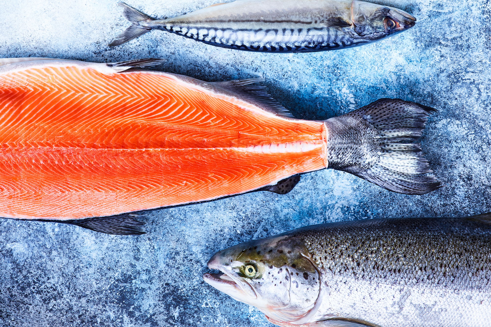3 different types of raw fish on a textured blue and white background