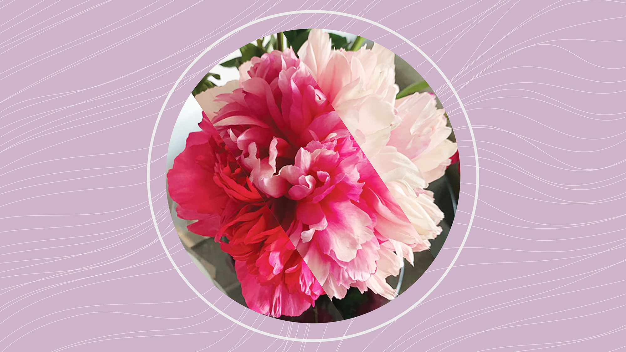 a circle divided into 3 sections with different colored peonies in each section on a designed background