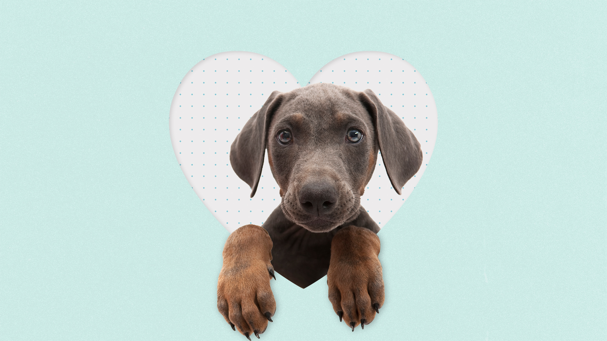 A puppy in the cutout of a heart