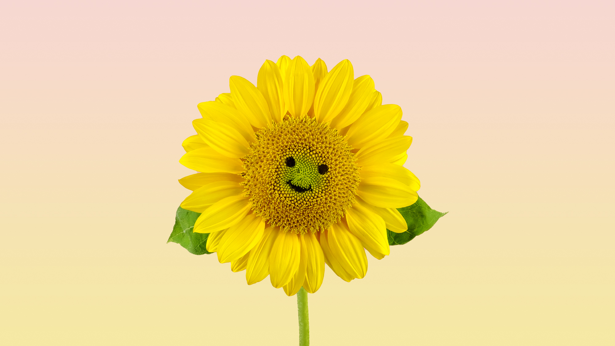A smiling sunflower