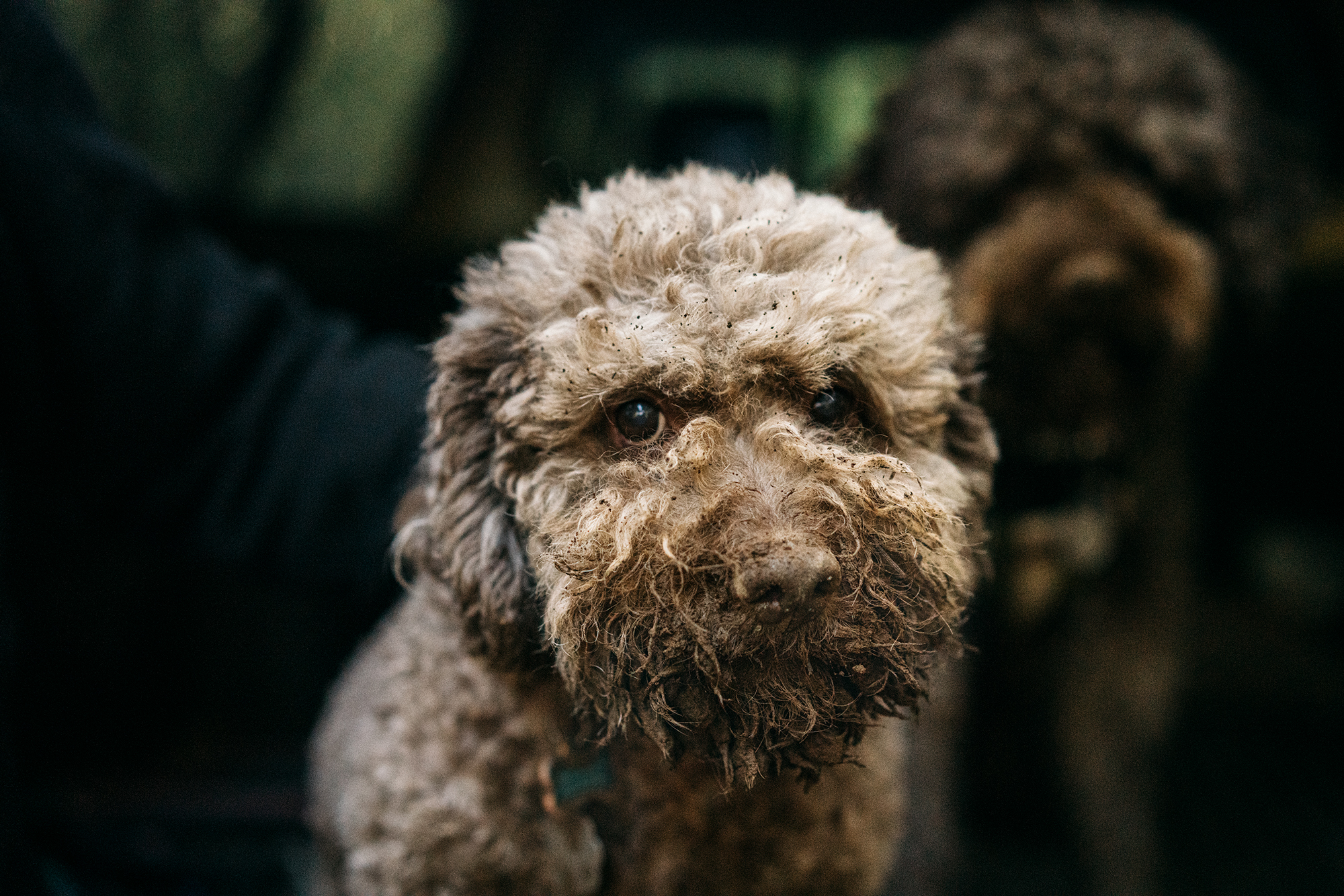 portrait of a dog with dirt on his snout
