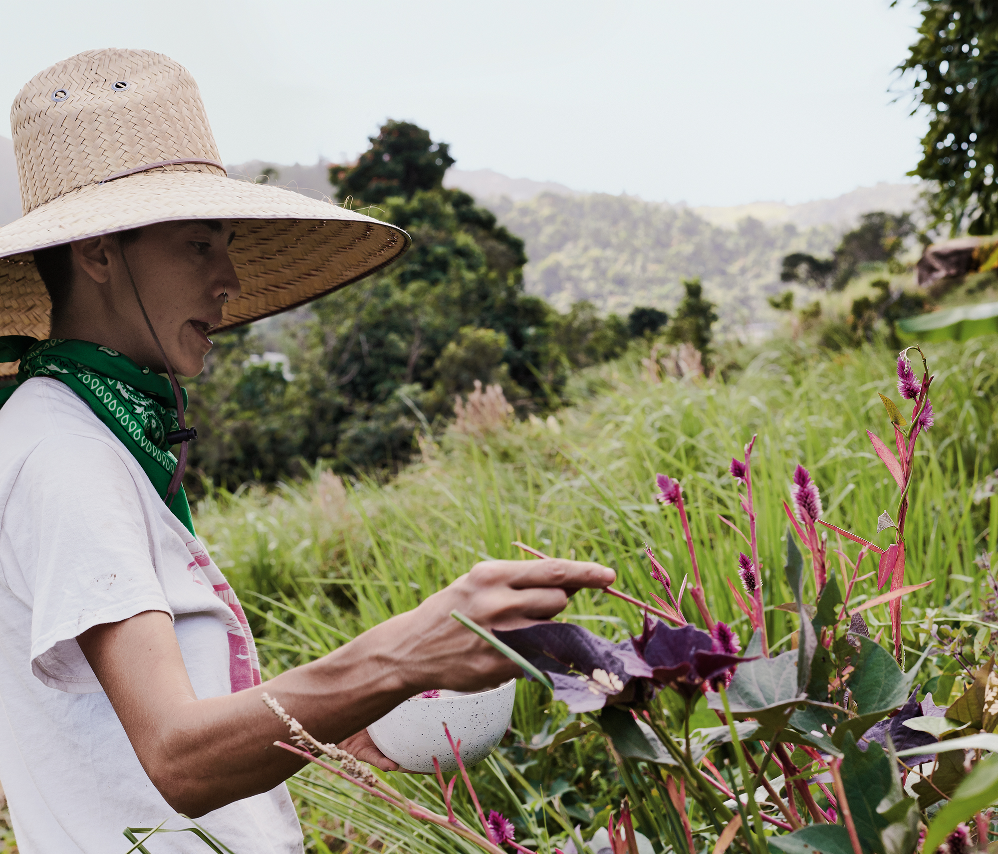 A person wearing a sun hat picking food in a communal farm in Puerto Rico