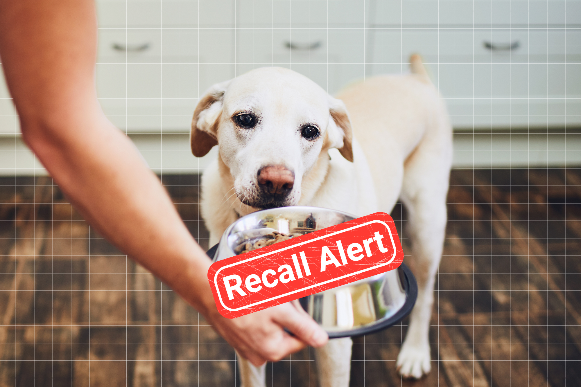 A dog looking at a bowl of dog food with a recall alert over it