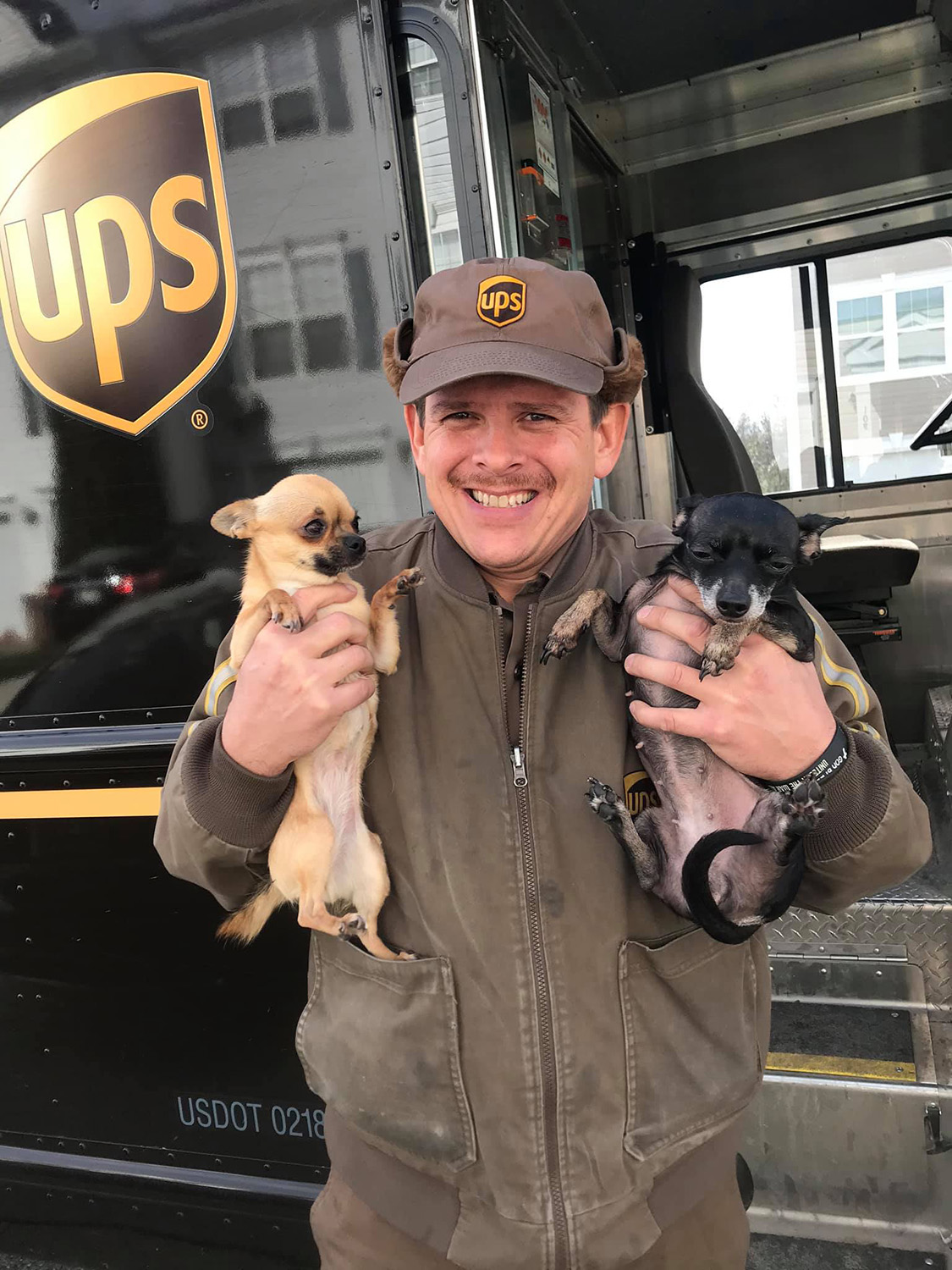We Can't Stop Scrolling Through 'UPS Dogs' Social Media Accounts