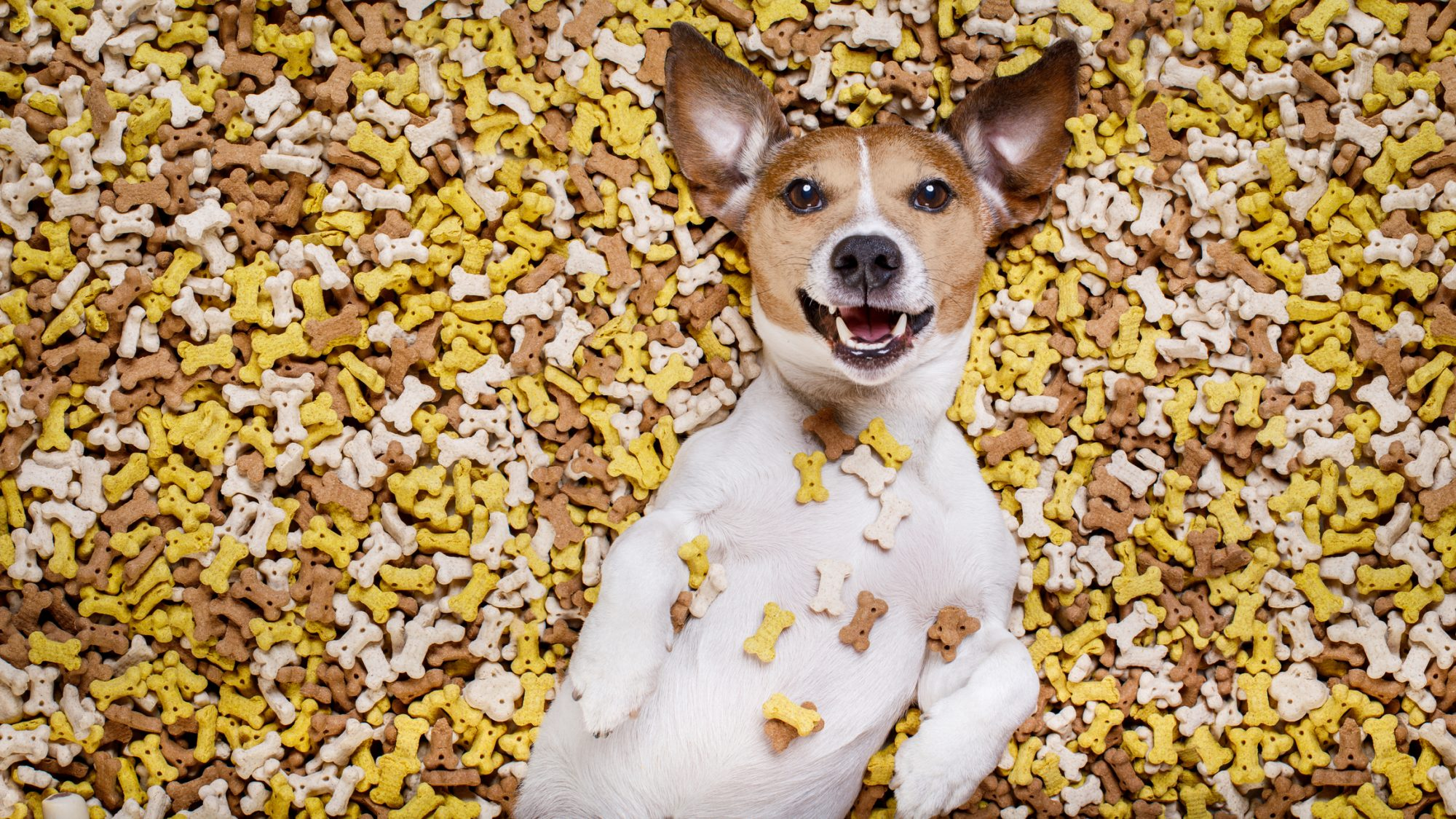 Hungry dog laying in pile of food.