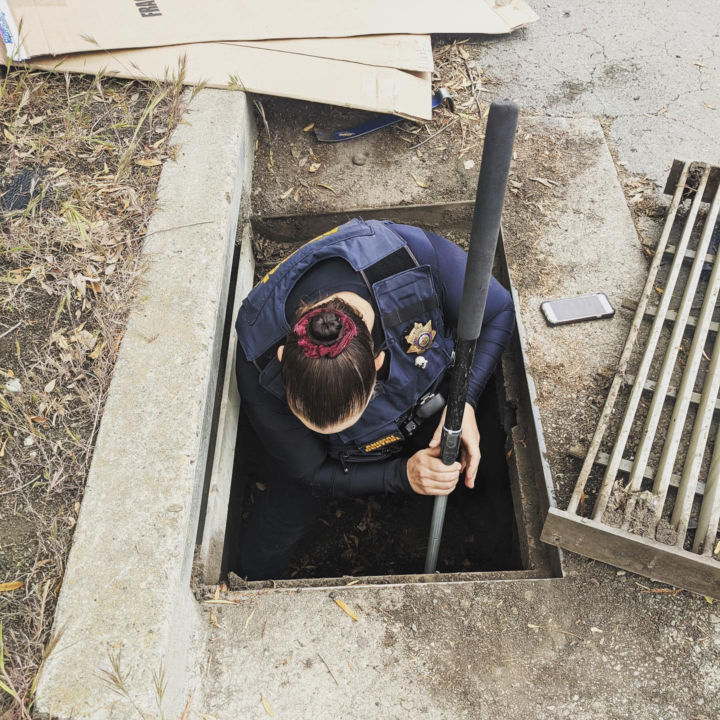 Animal control officer helps ducklings out of drain
