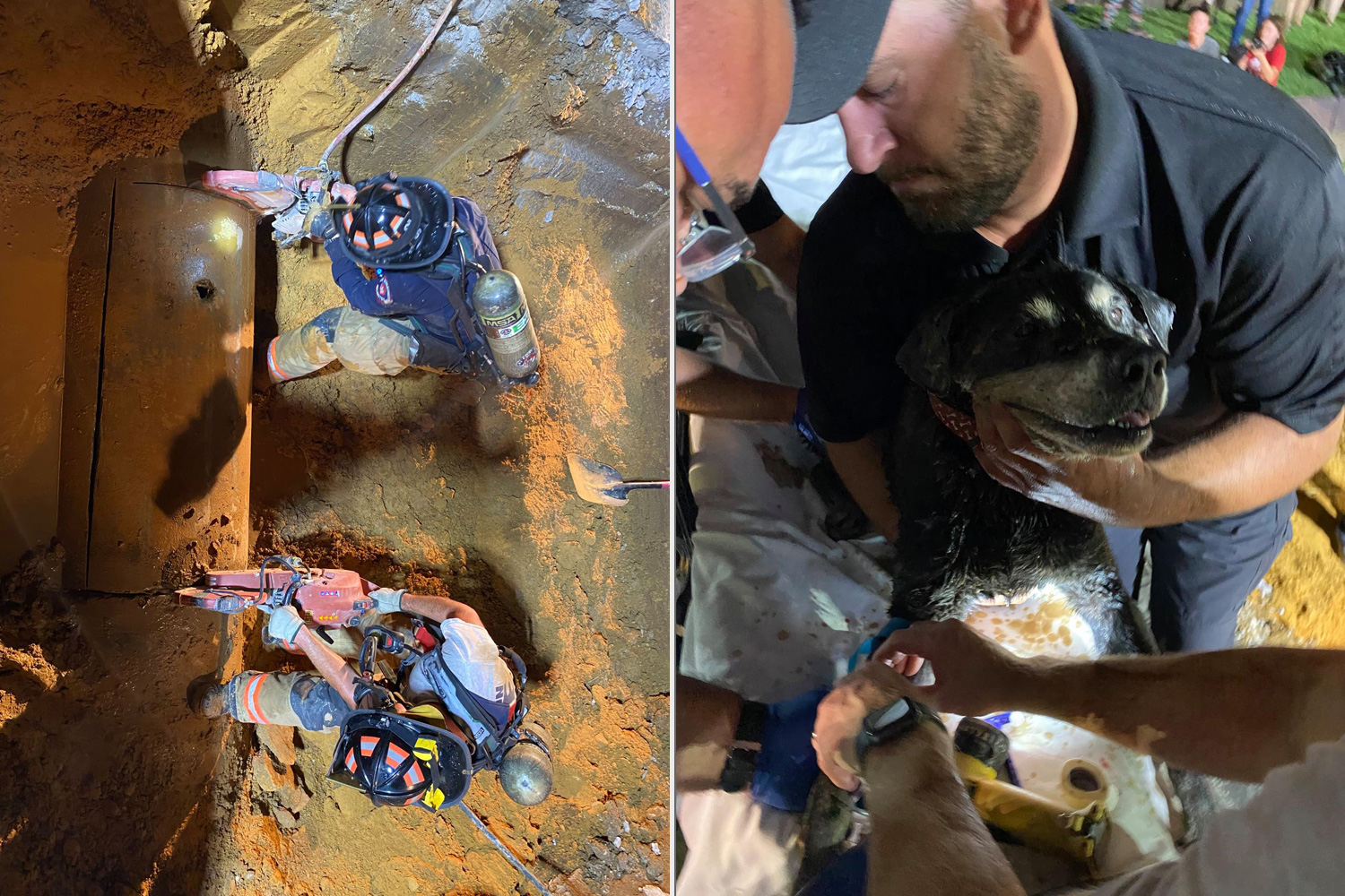 dog rescued from storm drain