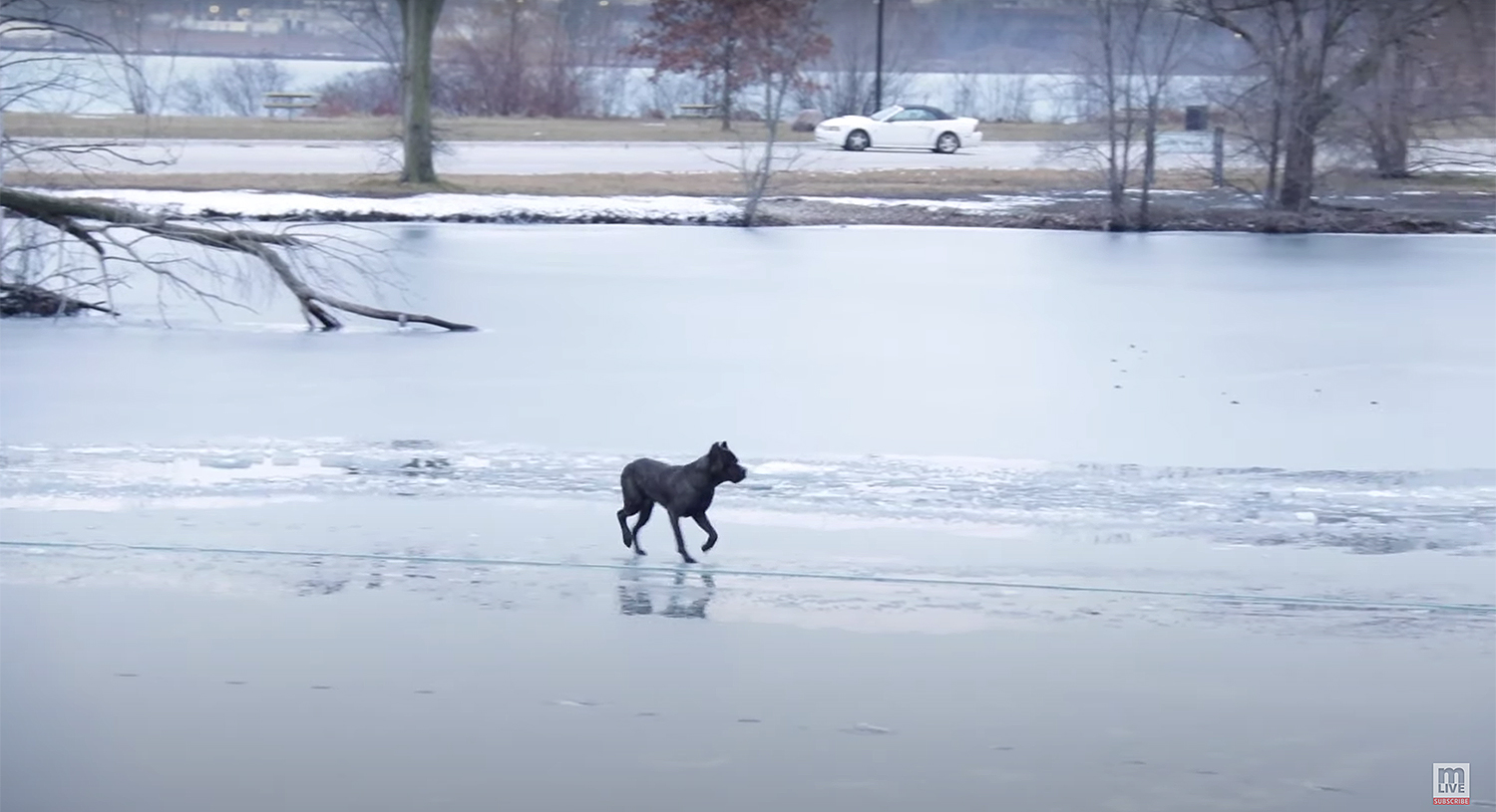 dog rescue ice