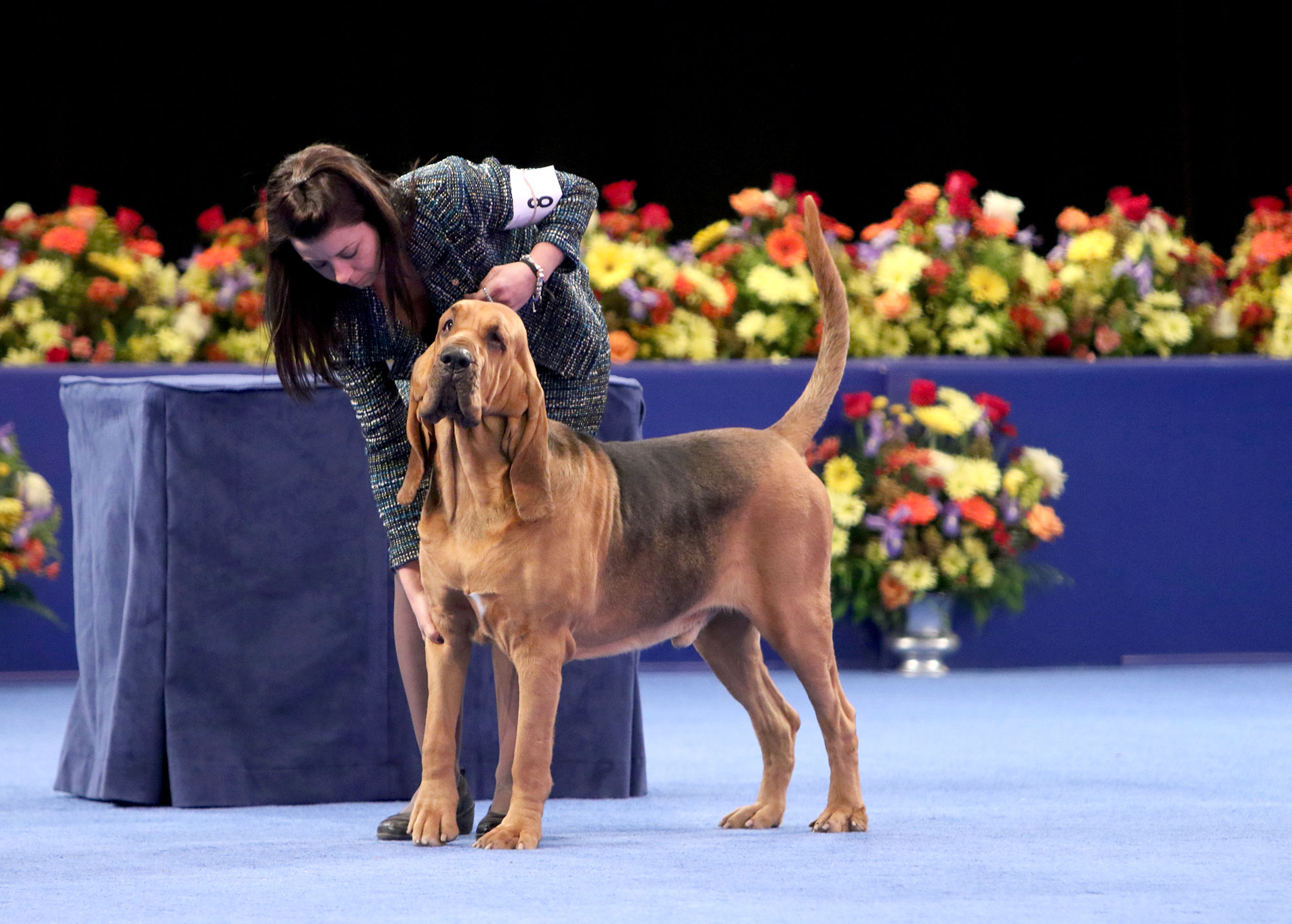 The National Dog Show Presented by Purina - Season 13