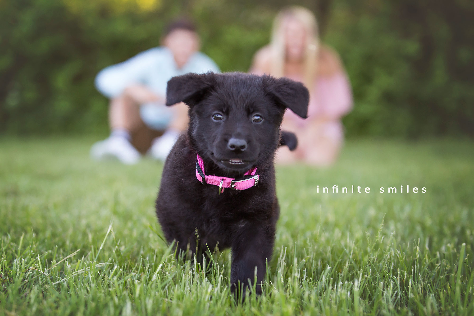 Puppy gender revealCredit: Cristy Sartwell/Infinite Smiles Photography