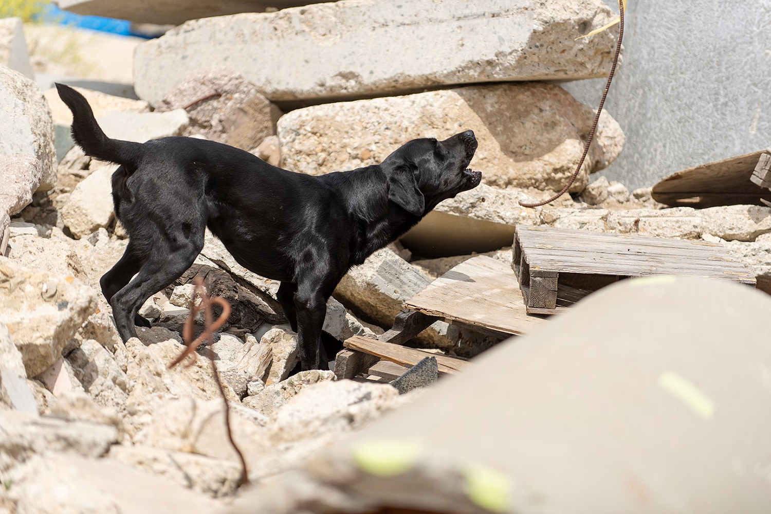 Rescue dog becomes search and rescue dog