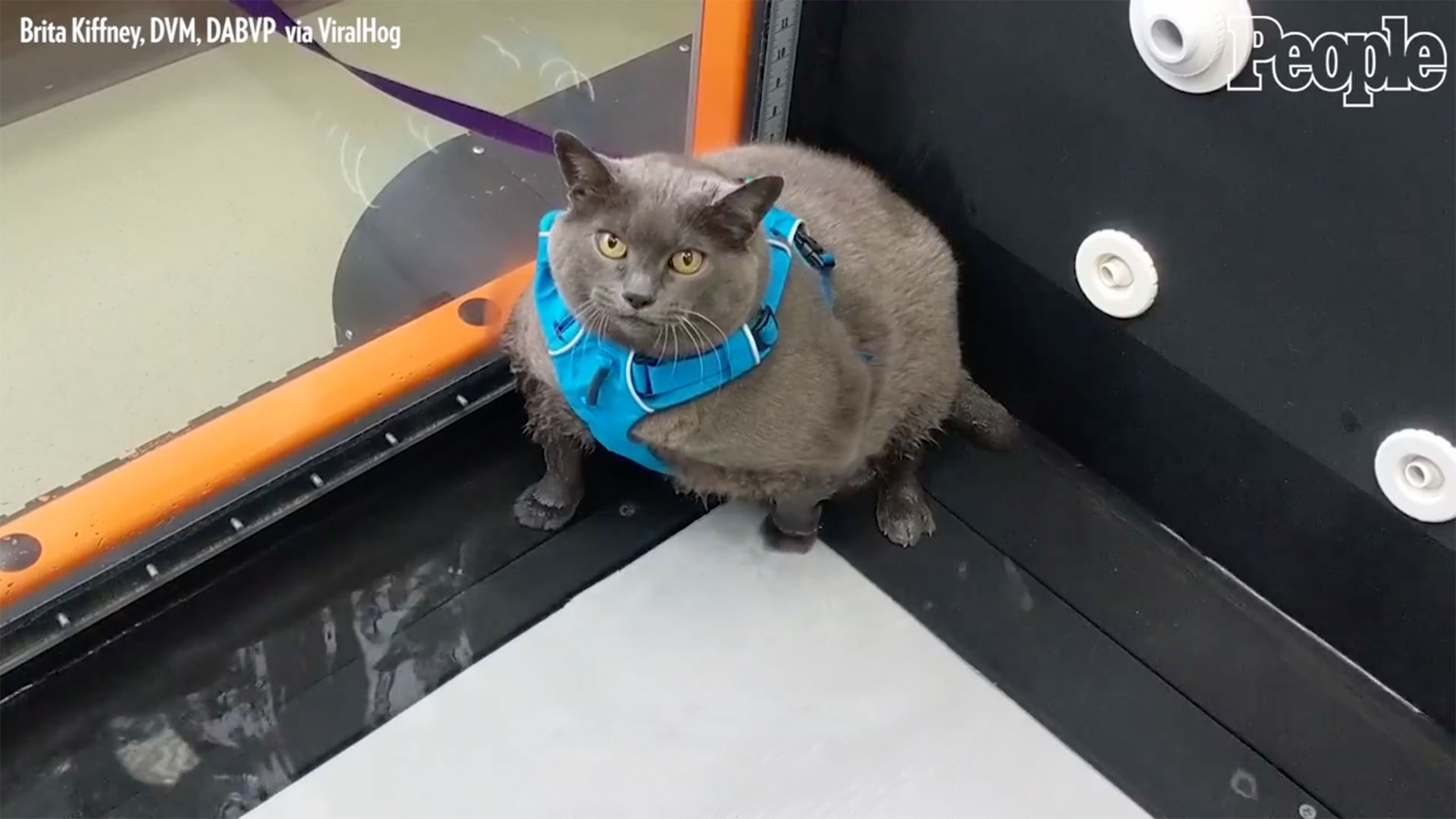 This Cat Doesn't Want to Work Out