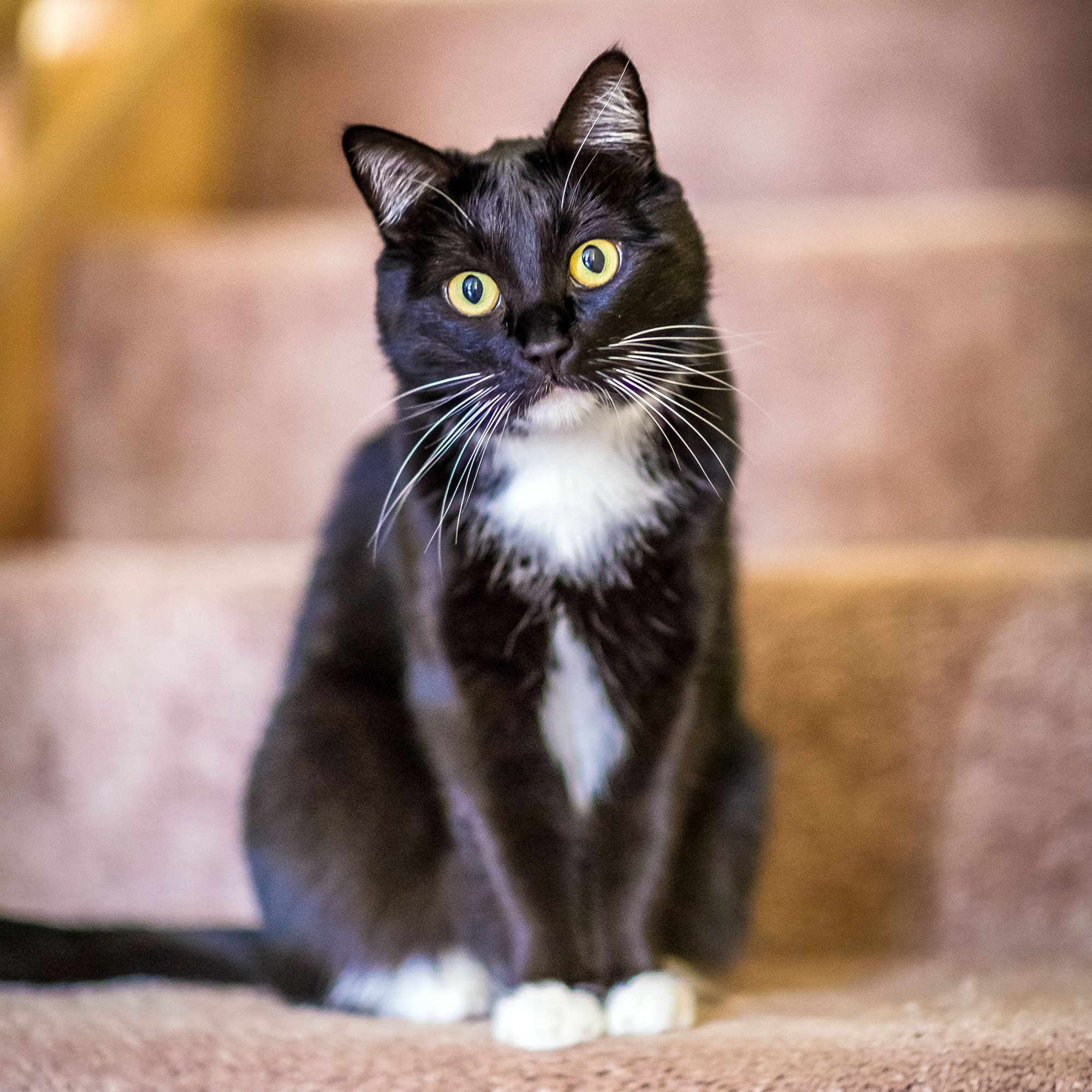 black and white cat sitting on stairs