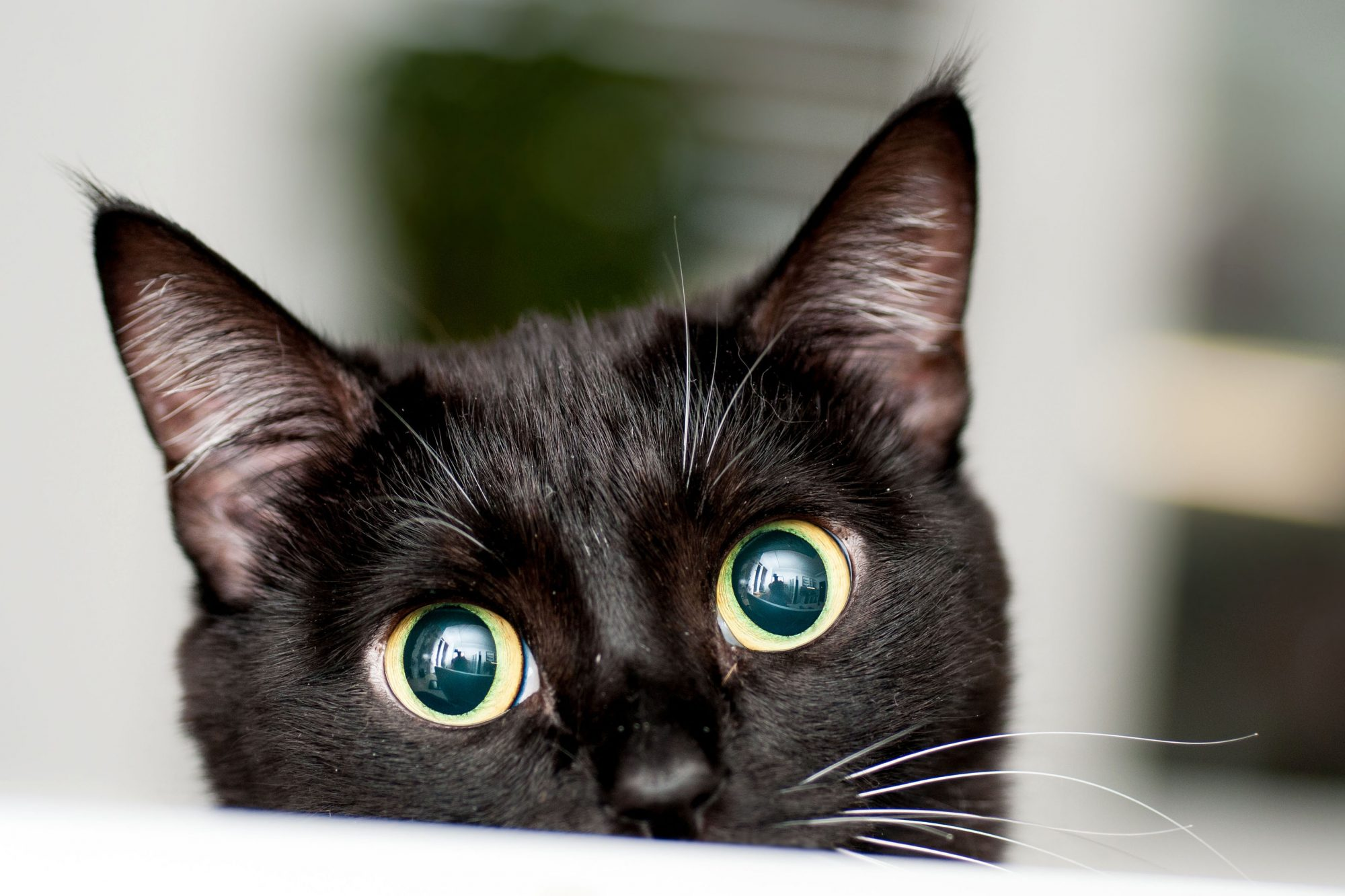 black cat with big eyes peeking over table top