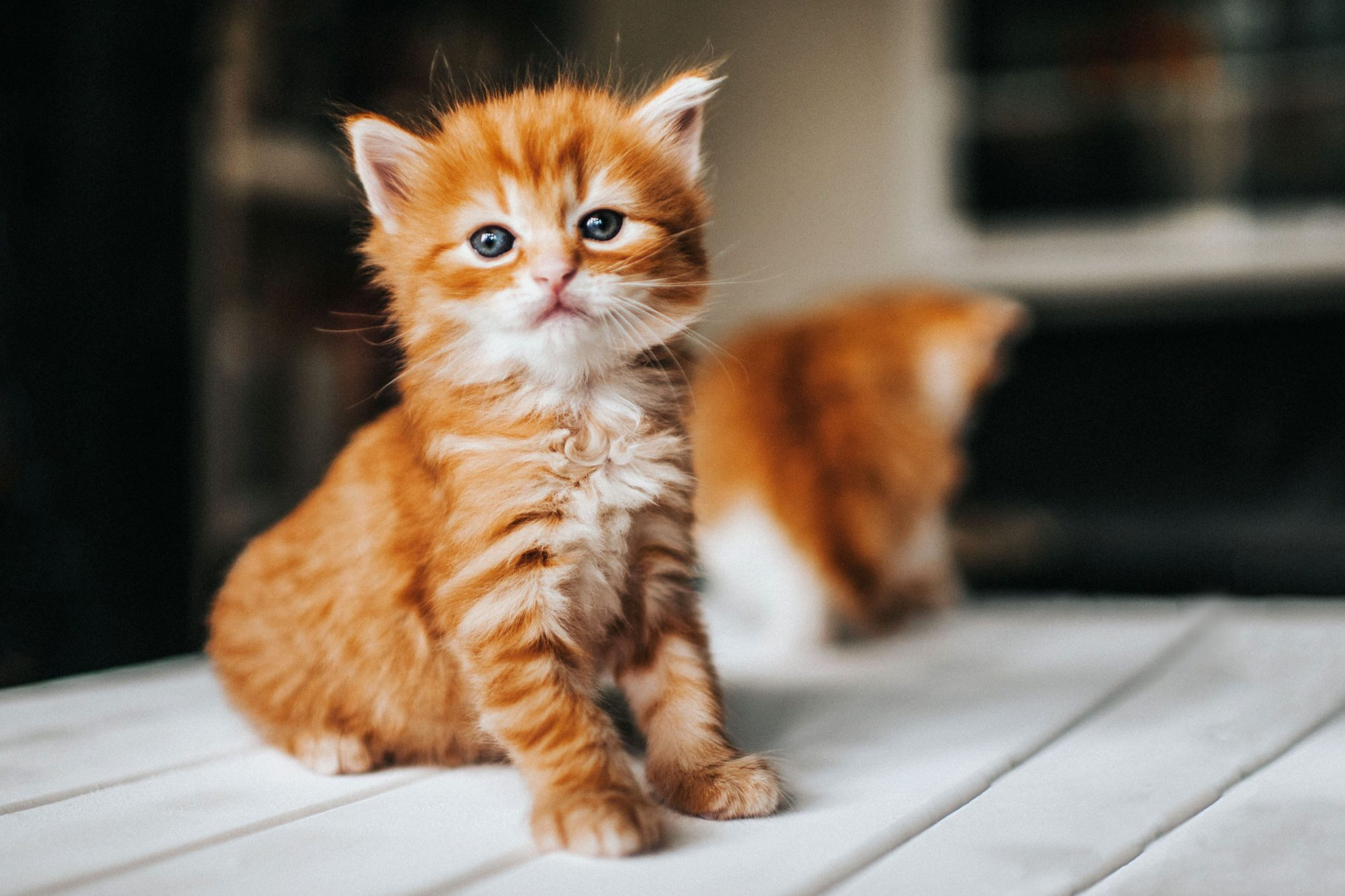 200+ Cute Cat Names for Every Kind of Kitty