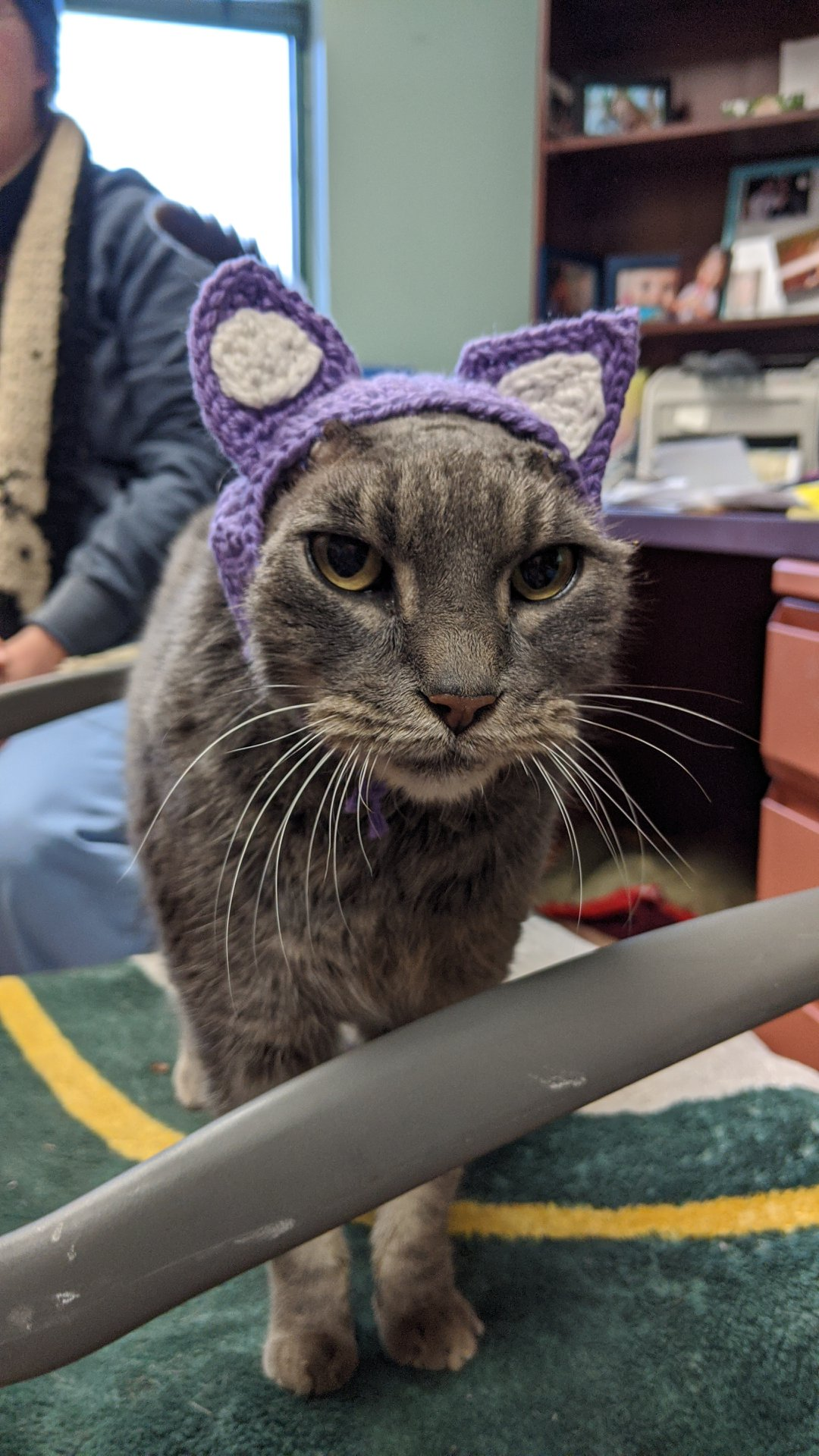 cat with missing ears wearing crocheted ears