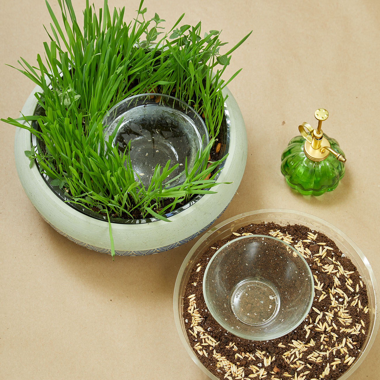 cat grass in bowl