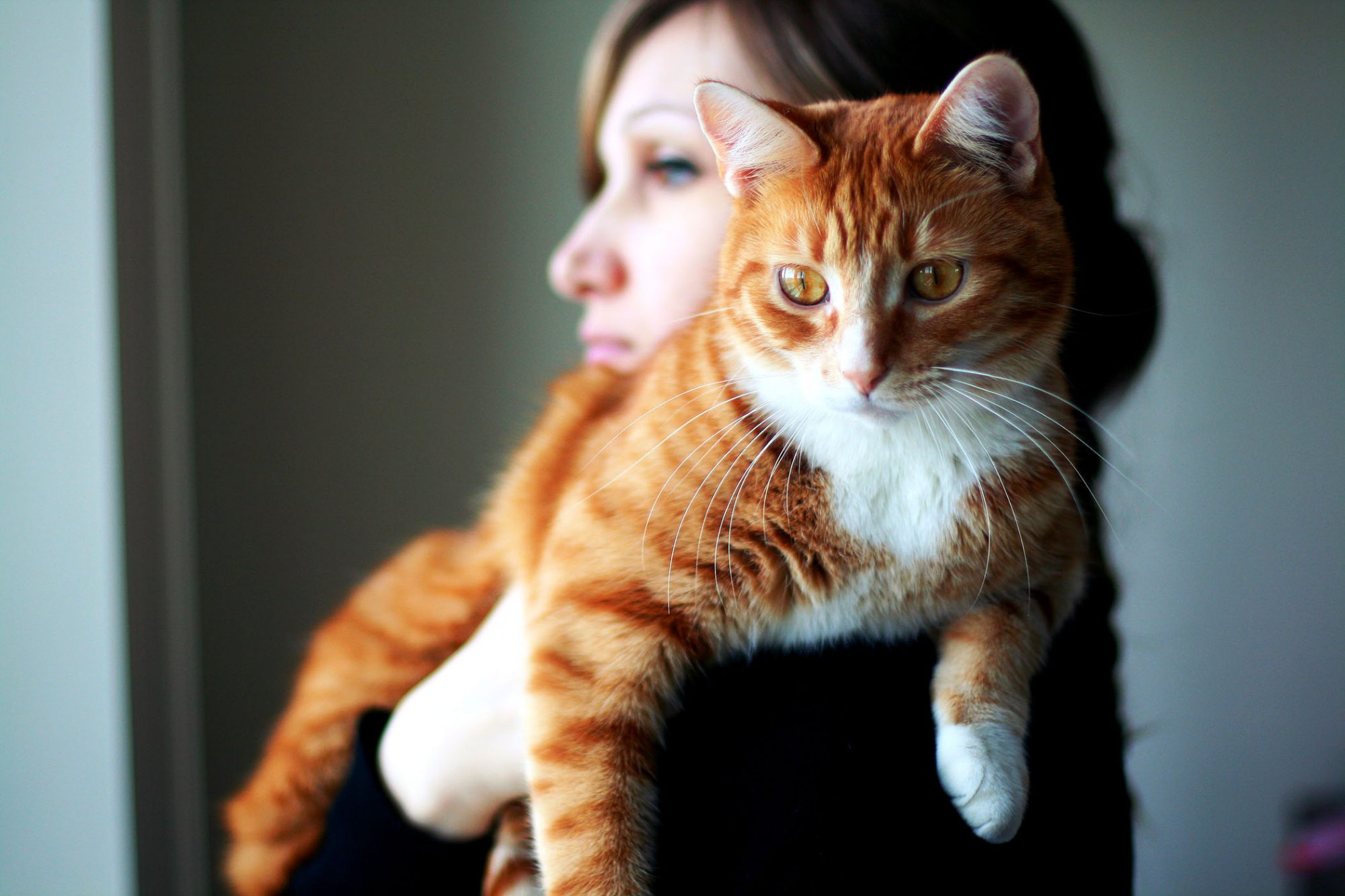 orange cat held by woman next to window