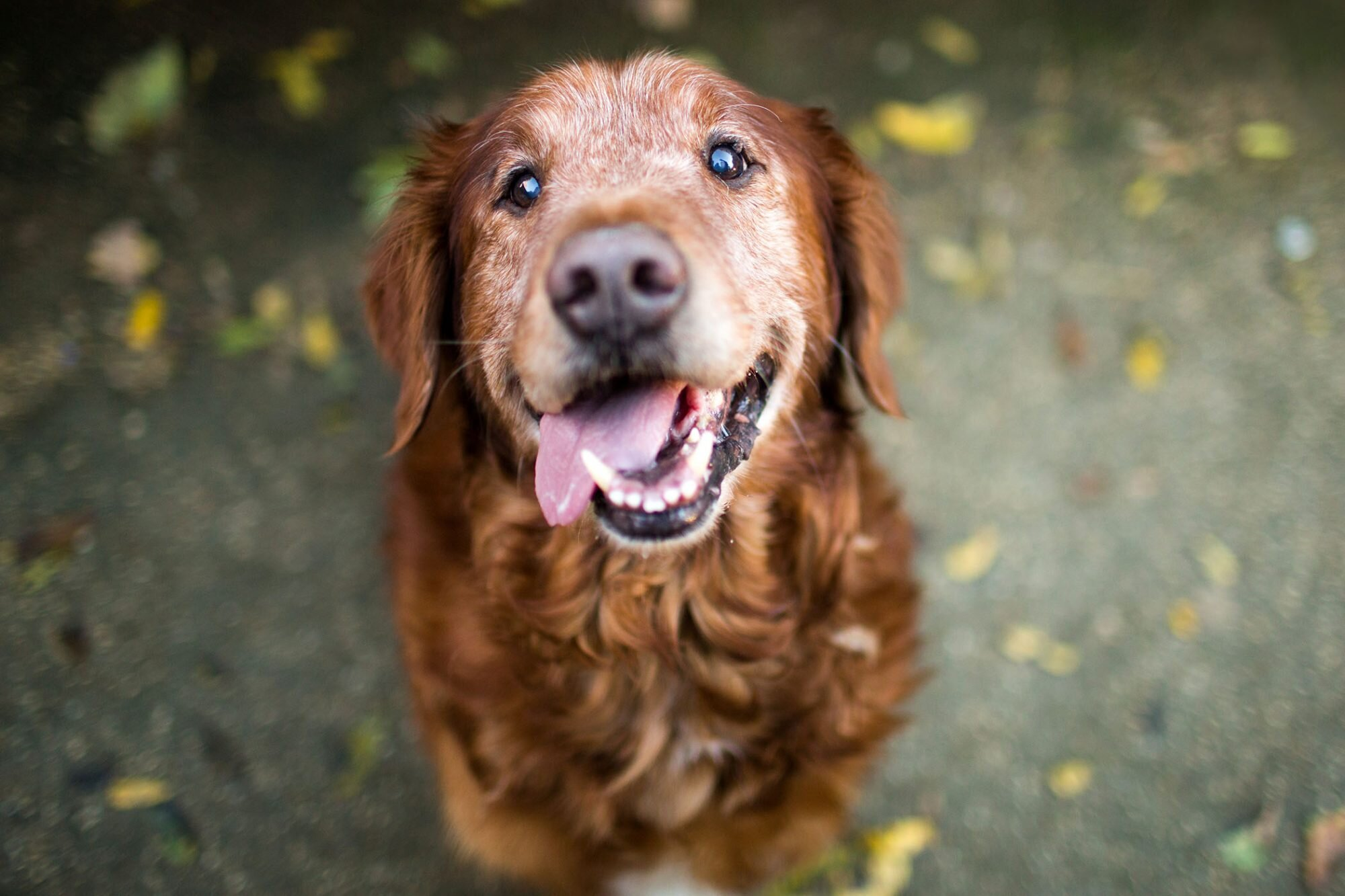 Adopting a Senior Dog: Why Older Dogs Are Awesome | Daily Paws