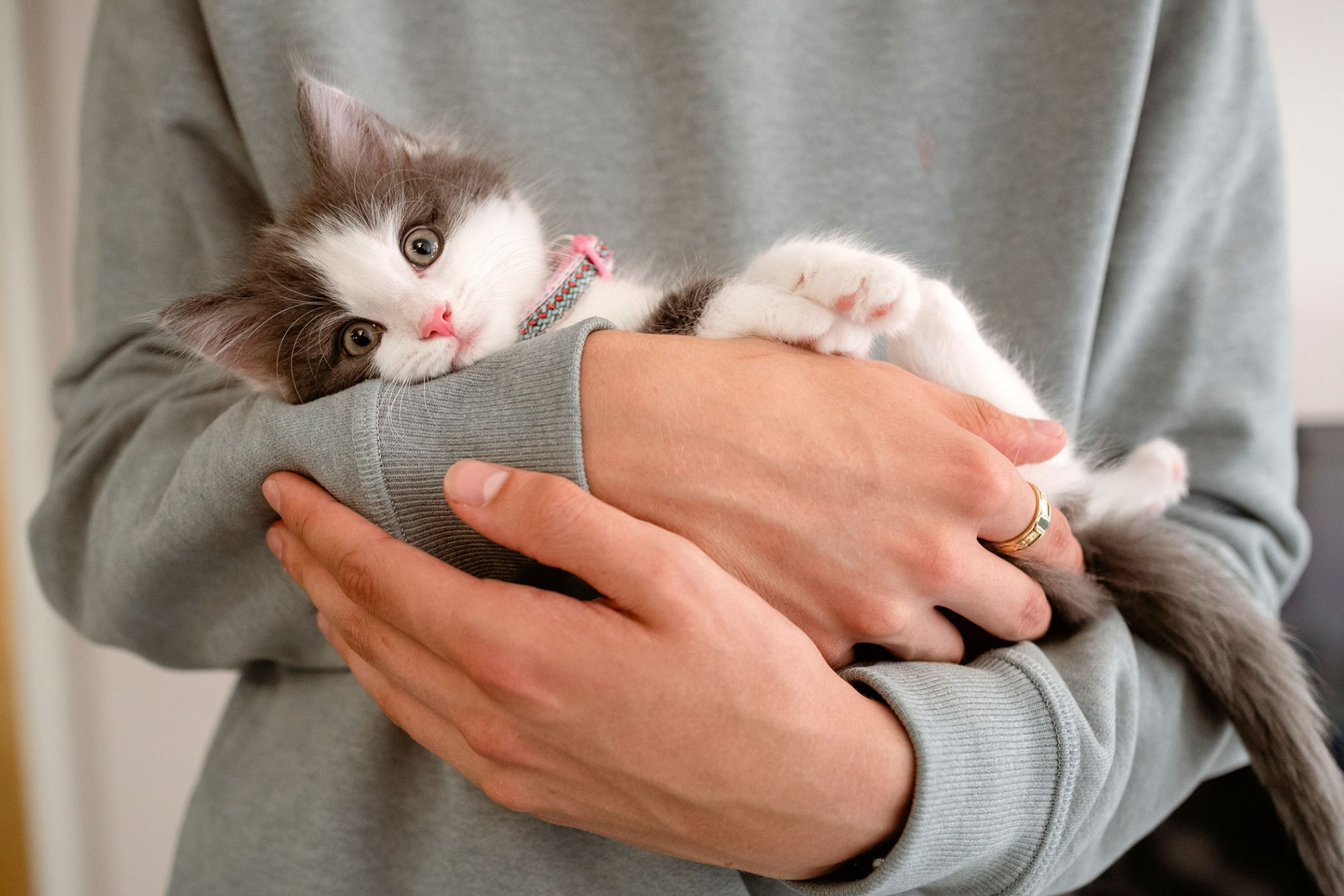 small kitten being held by man