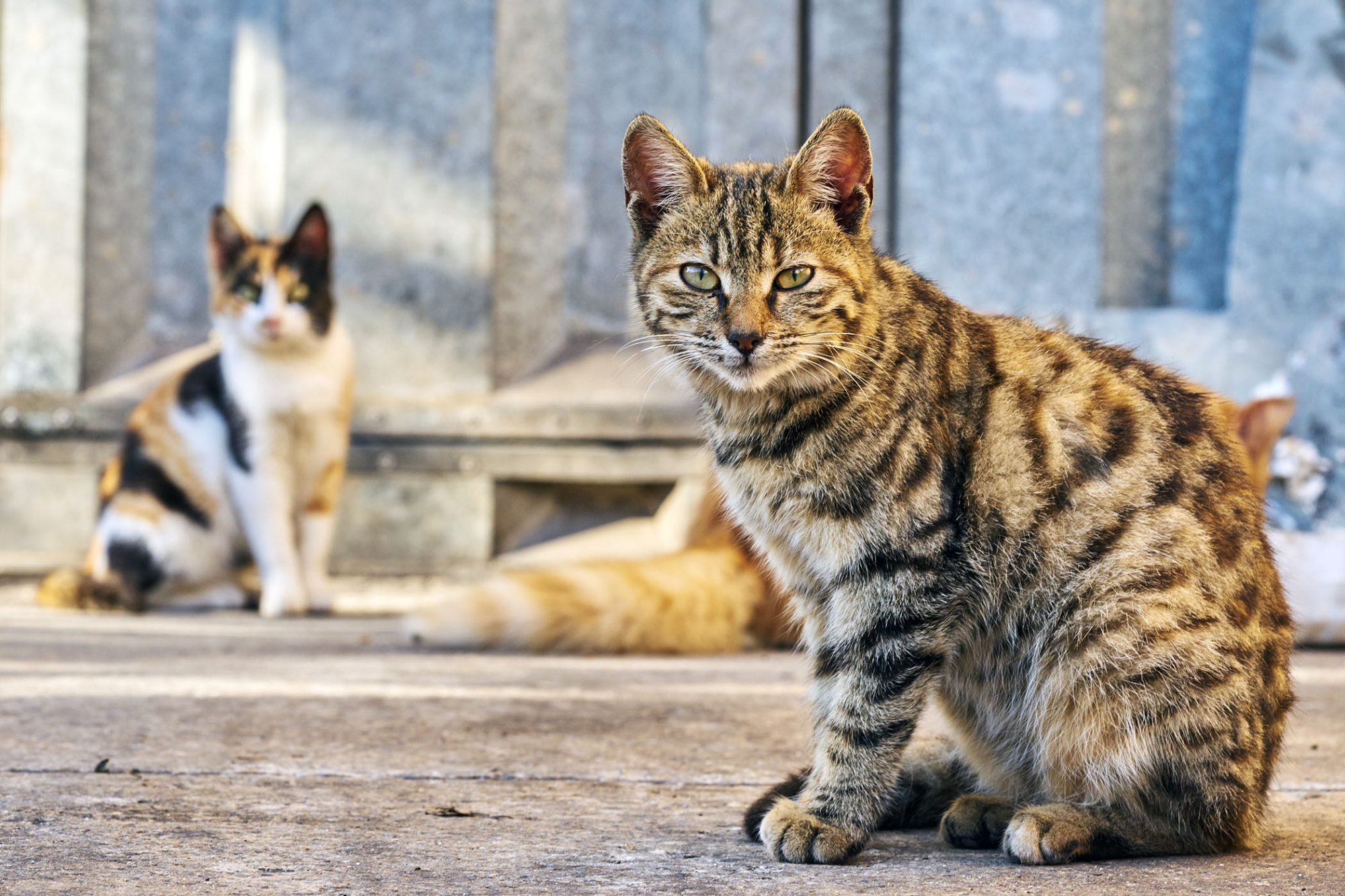 group of stray cats outside