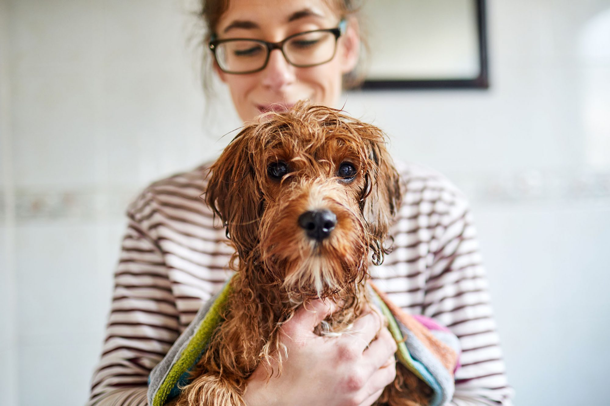 woman holding wet dog after bath