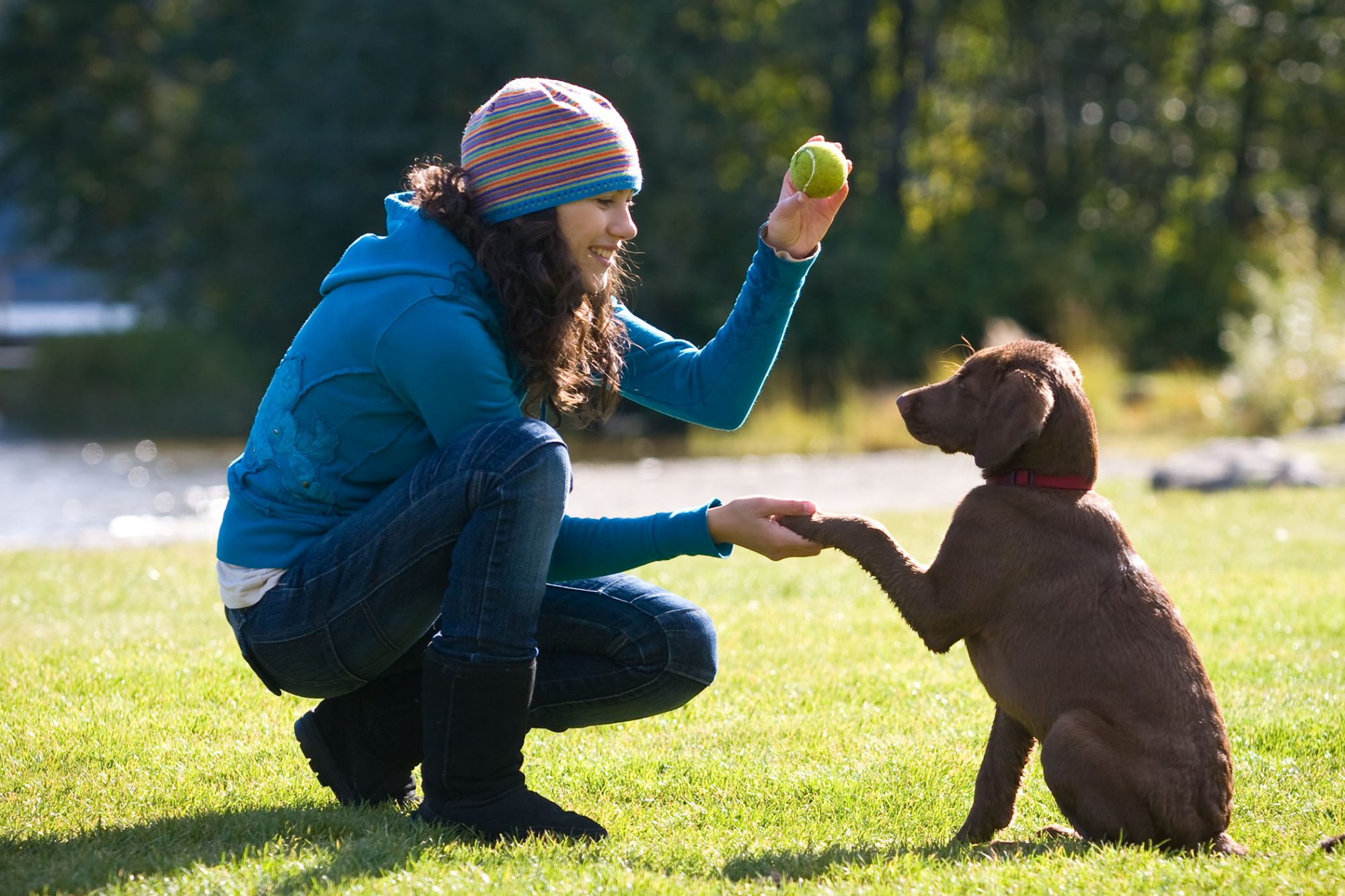 woman training dog to fetch in park